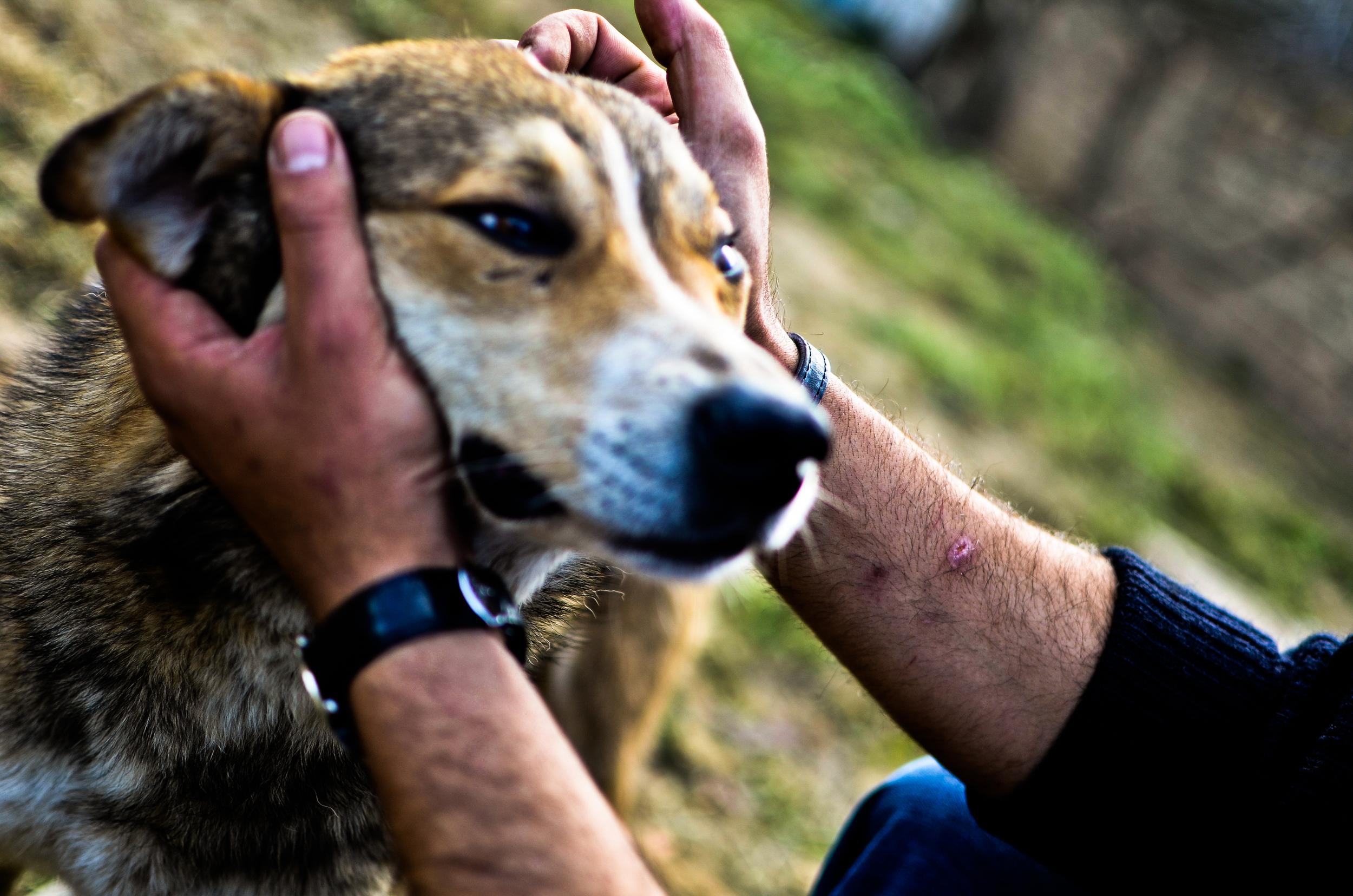 Saving Stray Animals with Fb