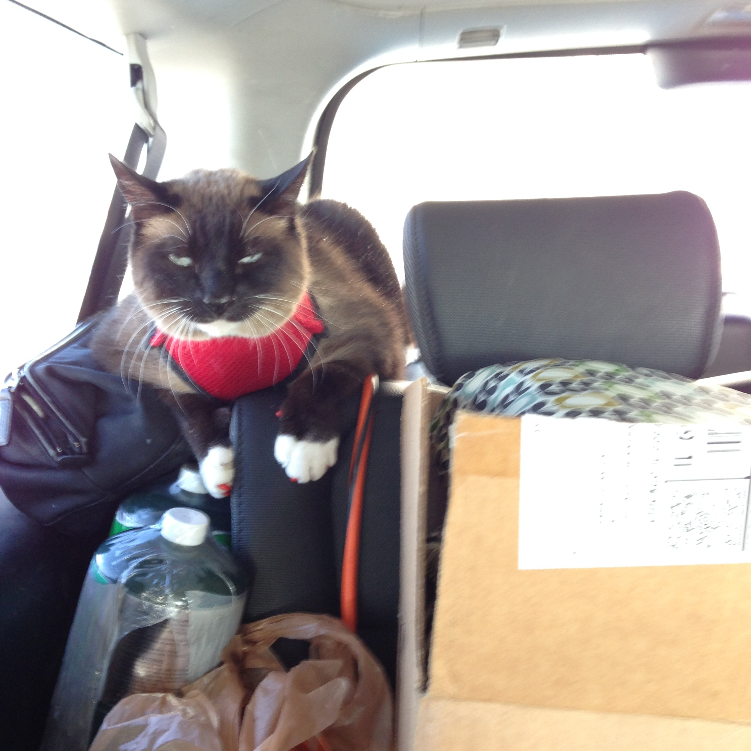 The cats don't seem to mind the wind chill at all.  They are comfy and cozy in the car.  Once we get to warmer climates we'll be able to put liquids back in the trailer and they'll have the run of the entire back of our Honda Element.