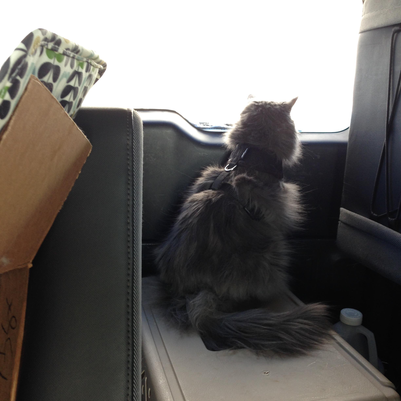 Floops is on navigation.