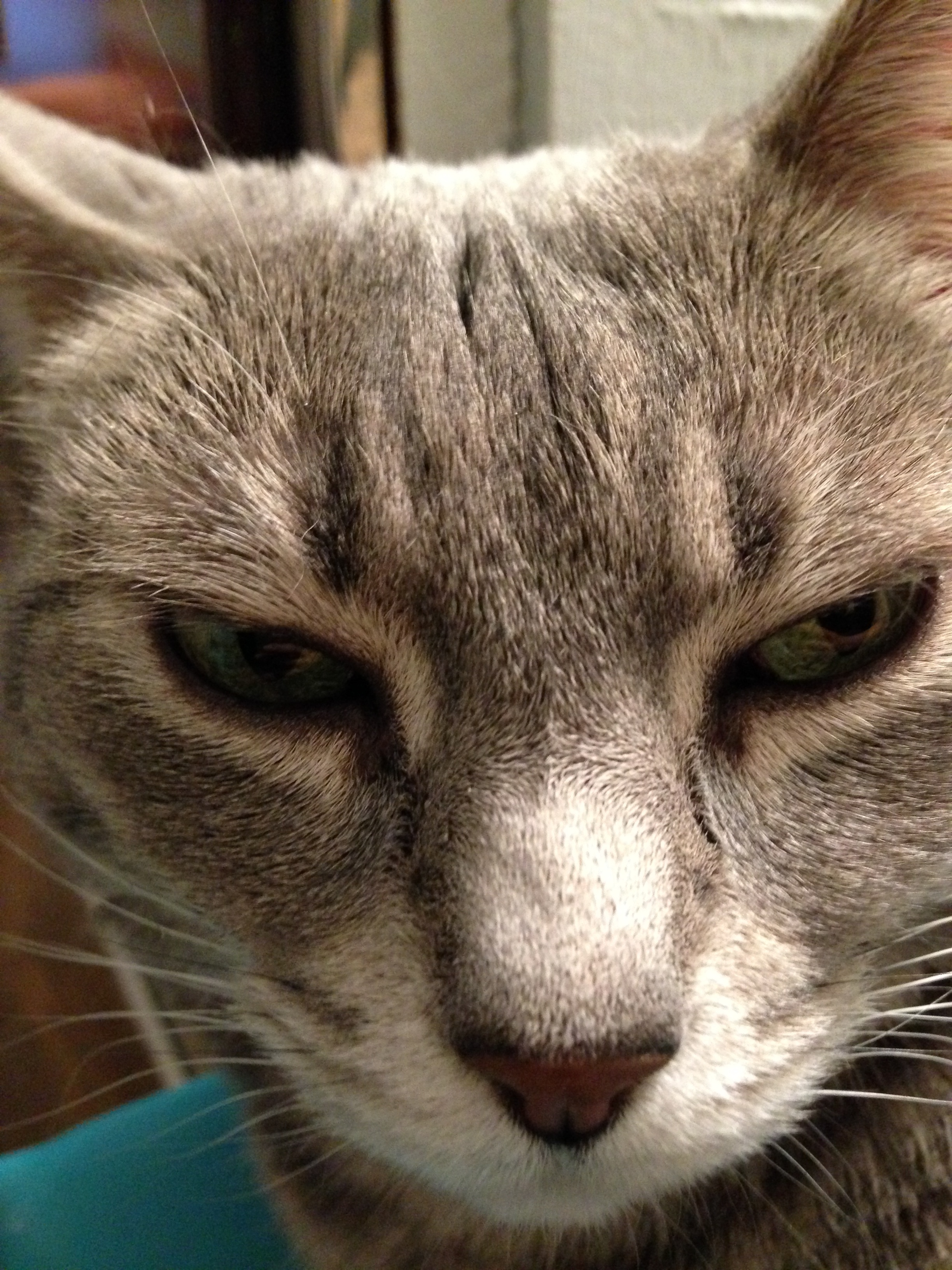 whoa cat selfie!