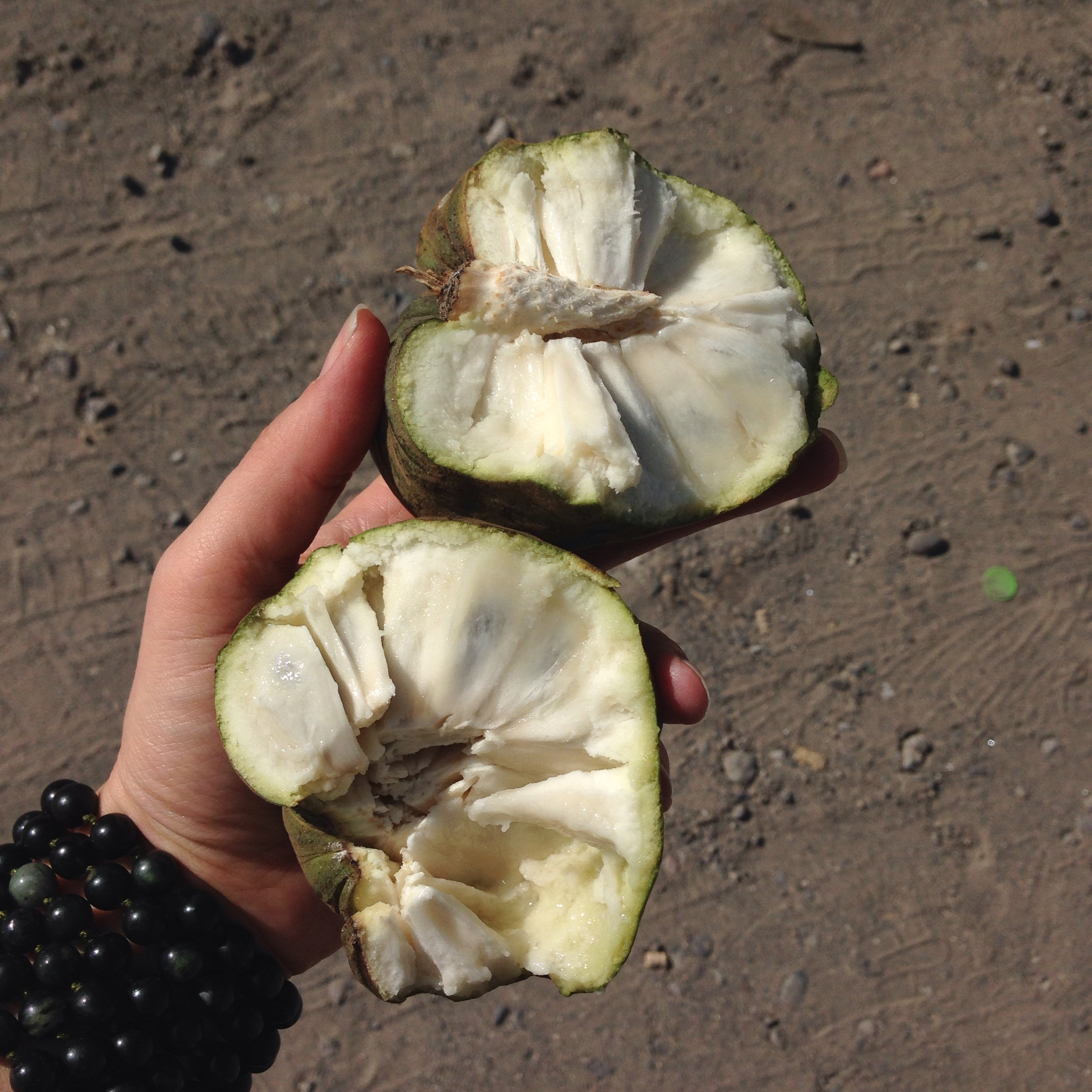 As always, we stopped for some delicious fruit on the side of the road.  This is Chirimoya, you eat the meat from around the seeds and spit the seeds out.  IT IS CRAZY DELICIOUS!