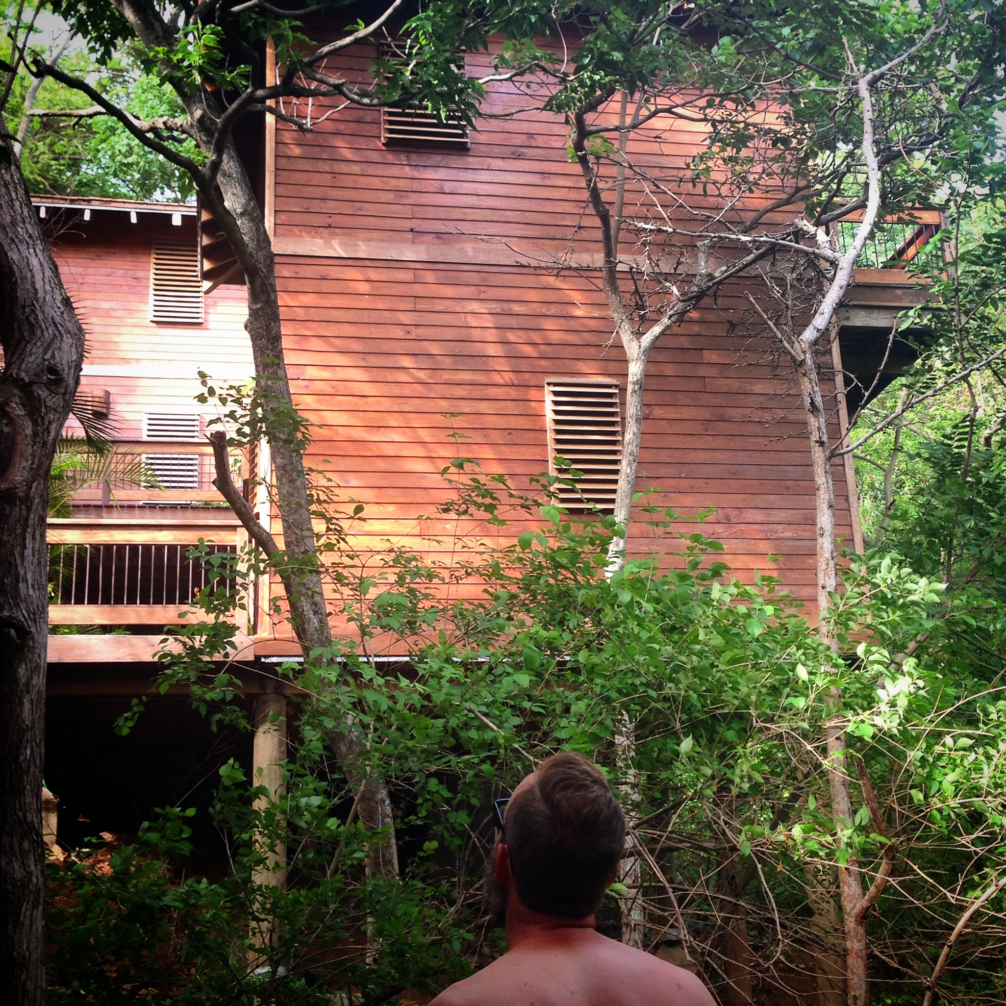 The treehouse, Eric is looking for Howler monkeys
