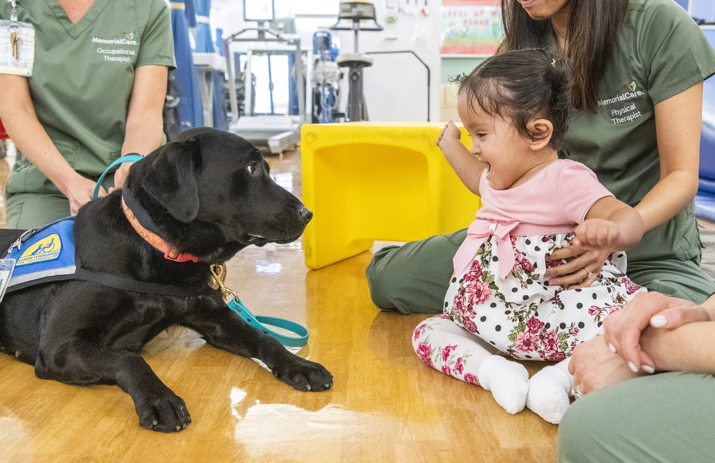 Amanda Perez, 2 of Los Angeles, reacts to Zeta, Facility Dog, during her therapy at Miller Children's & Women's Hospital In Long Beach January 10, 2019. Zeta is the hospitals first full-time Facility Dog.