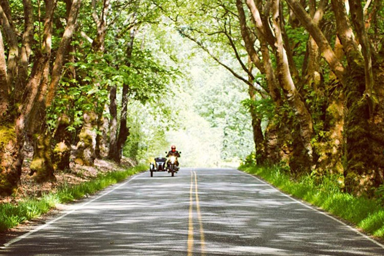 tourist_forest.jpg