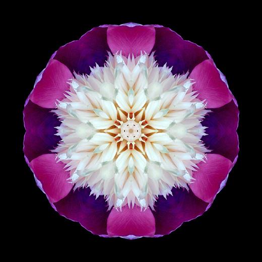 Bowl_of_Beauty_Peony_I_600x600.jpeg