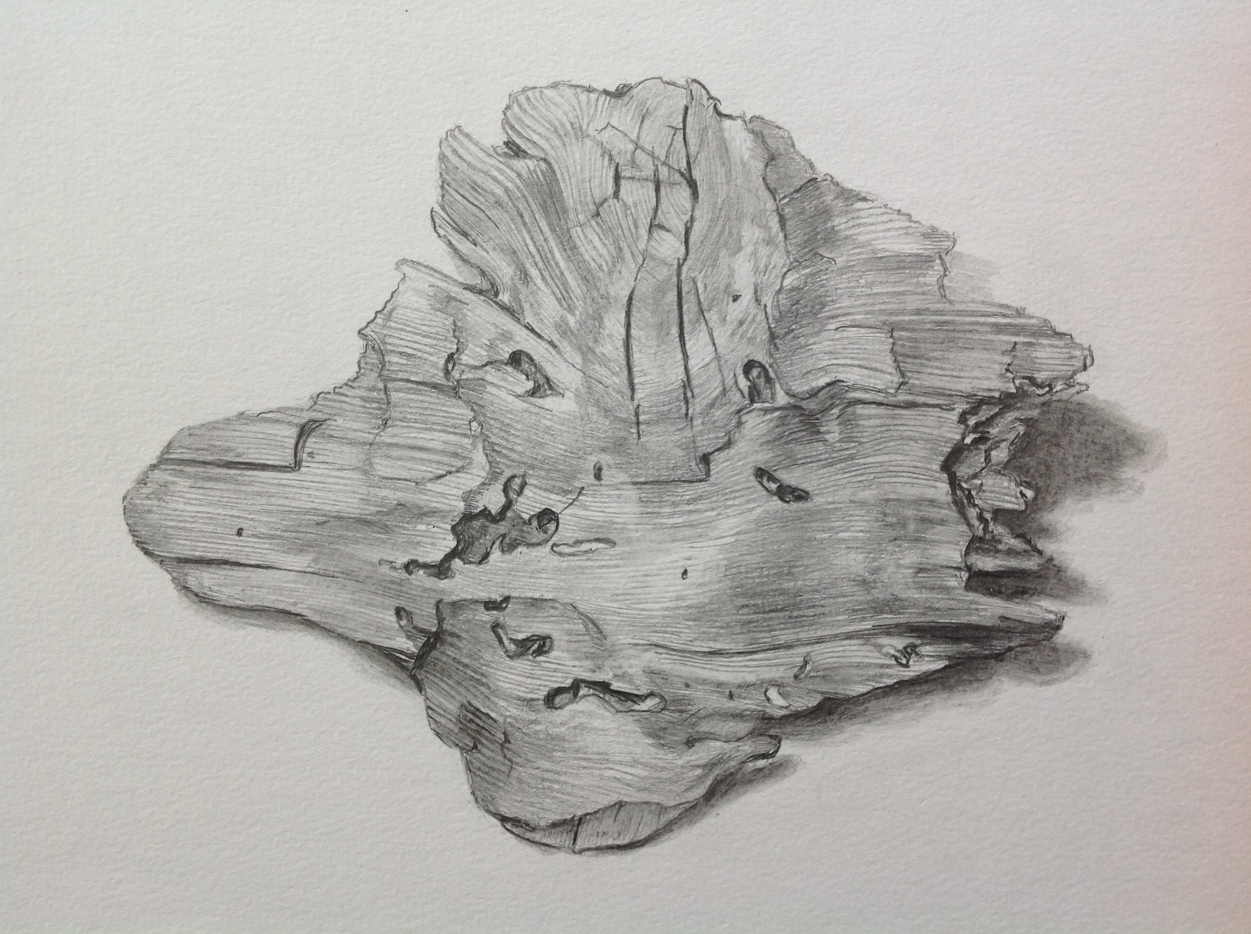 Driftwood  , study, 2013.Graphite on paper. Available for purchase
