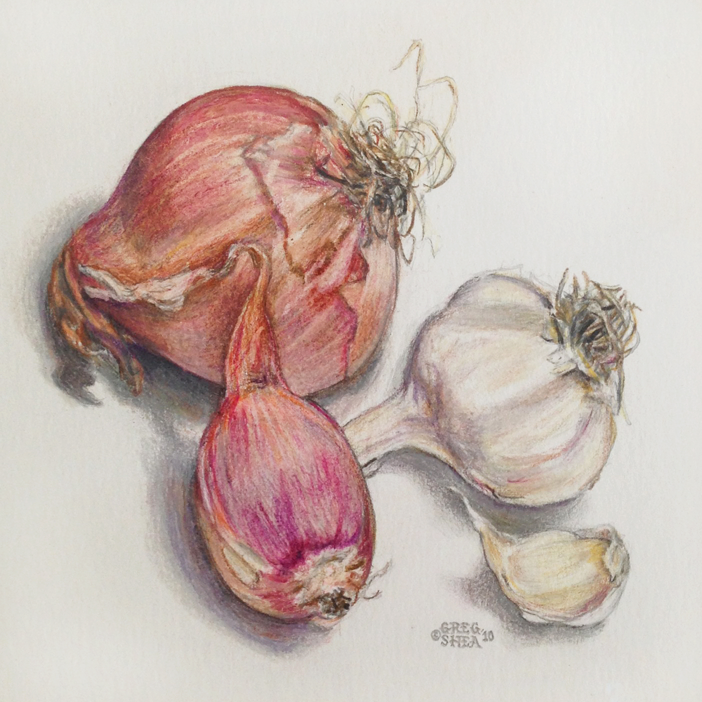Shallots and Garlic  , 2010. Colored pencil on paper. Private collection.