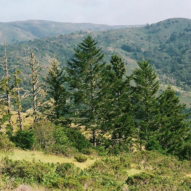Sweet Trees in California -