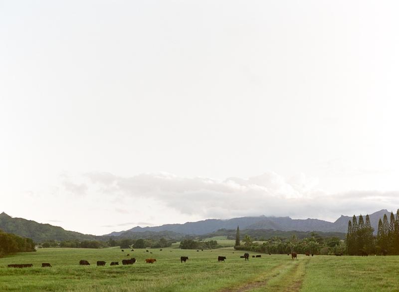 kauai-film-photographer-038.jpg