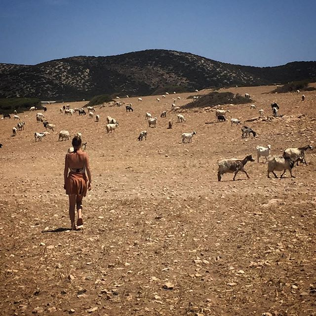 On Despotiko with goats. #aegeancenter #paros #journey #farewell #studyabroad #studyart #student #artschool #islandlife #despotiko #goats #landscape #photography