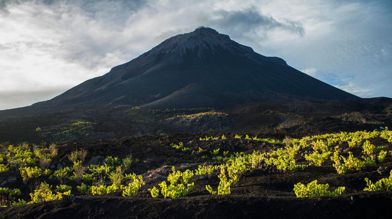 VulkanGrapesSMALL.jpg