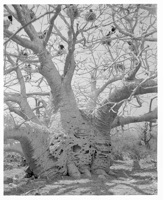 tree3_squarespace.jpg