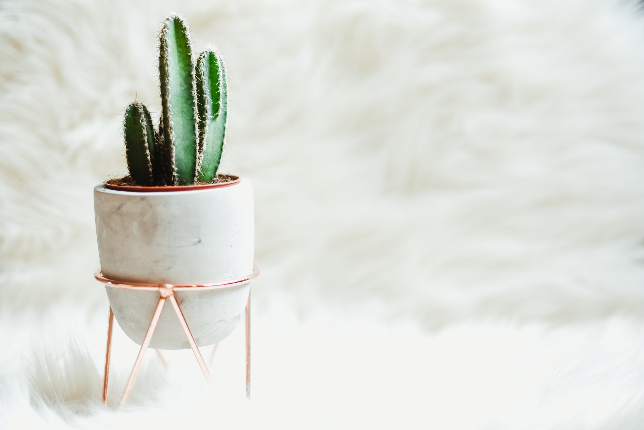 The 10 Essential House Plants - Cactus