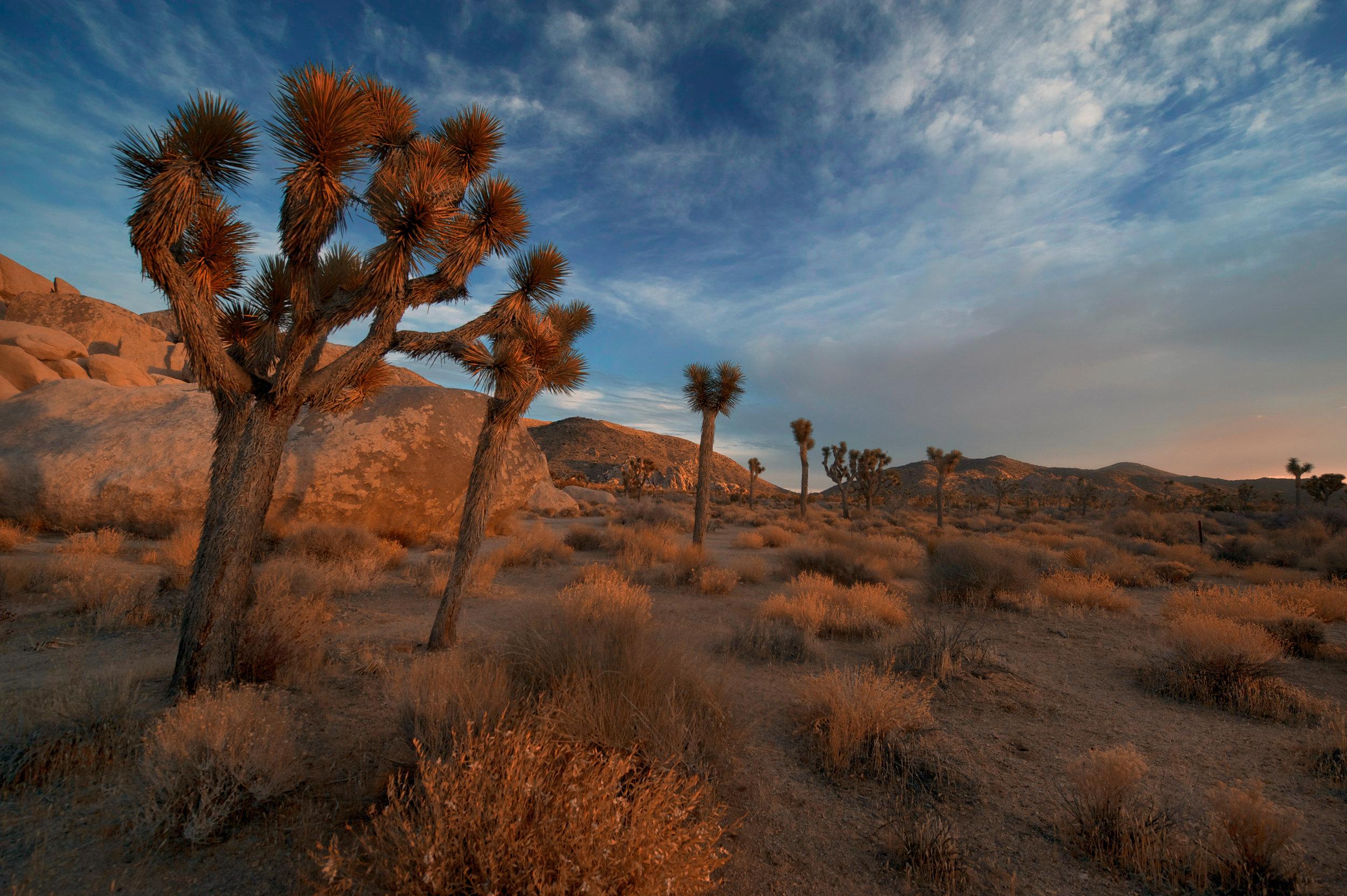 10 Reasons You Should Visit Joshua Tree