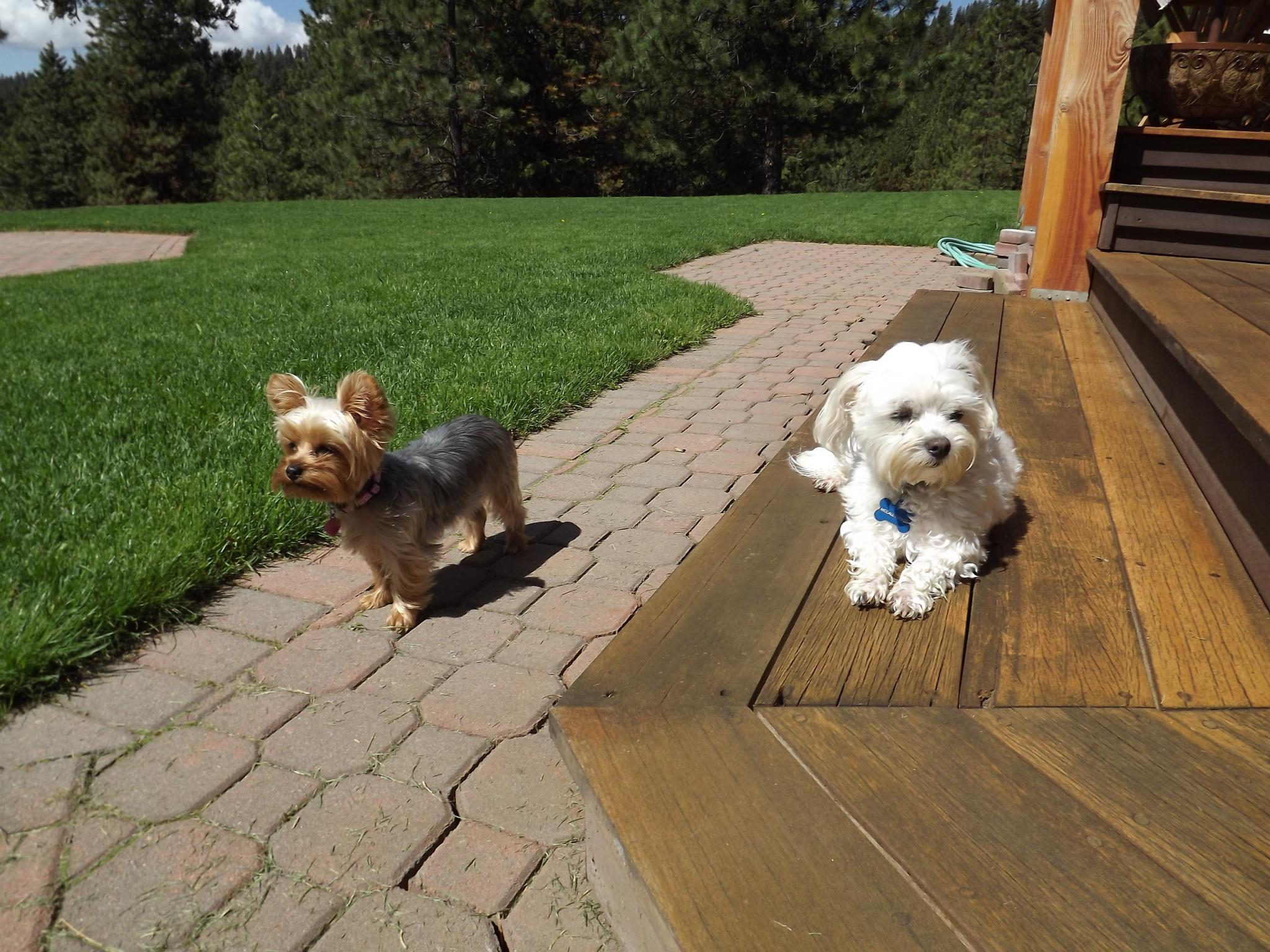 Stella and McCall help us watch wildlife.