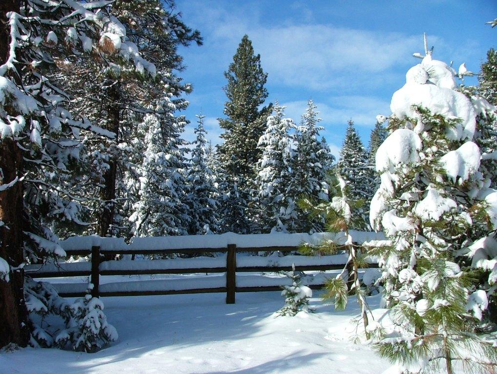 beauty of winter snow