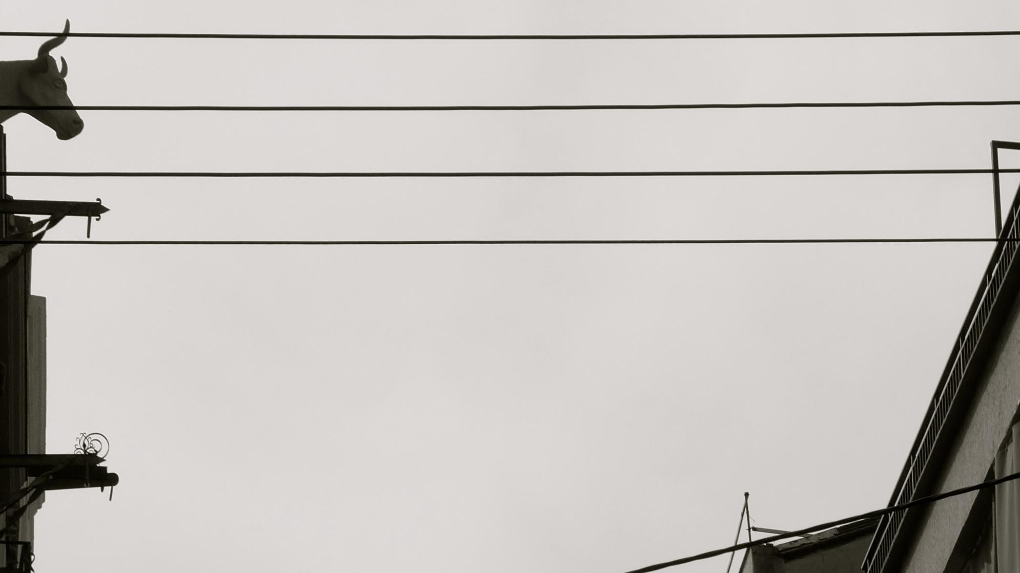 Toro y cables