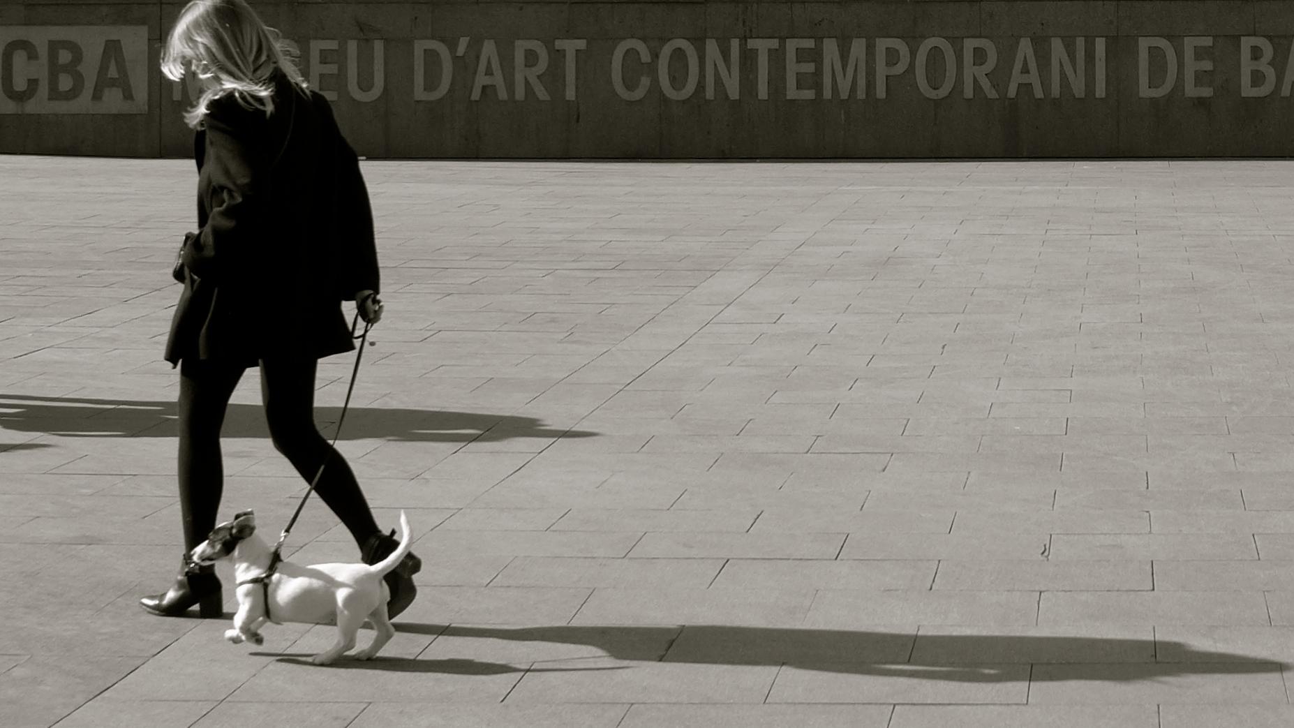 D'Art Contemporani
