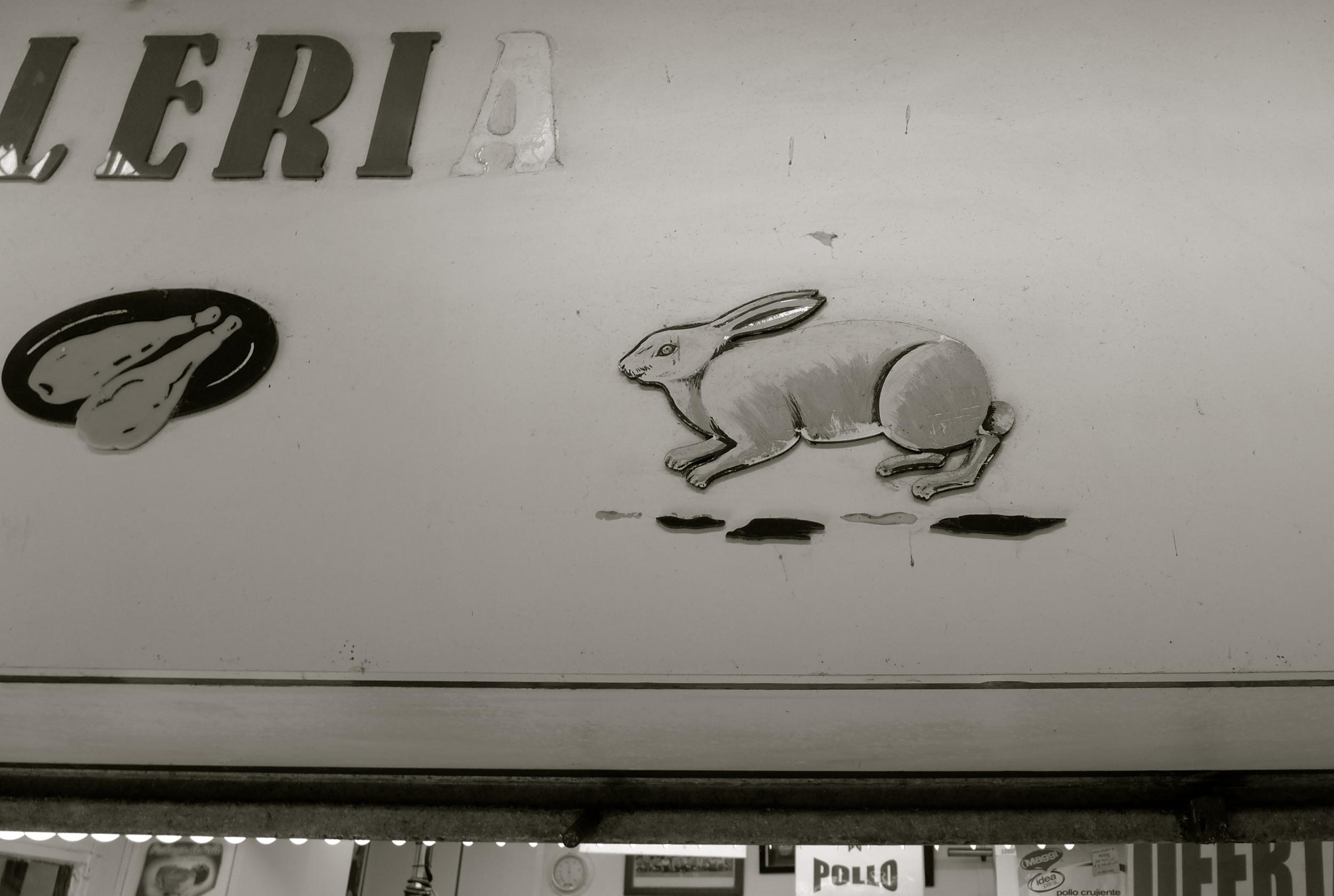 Conejo de mercado - 1