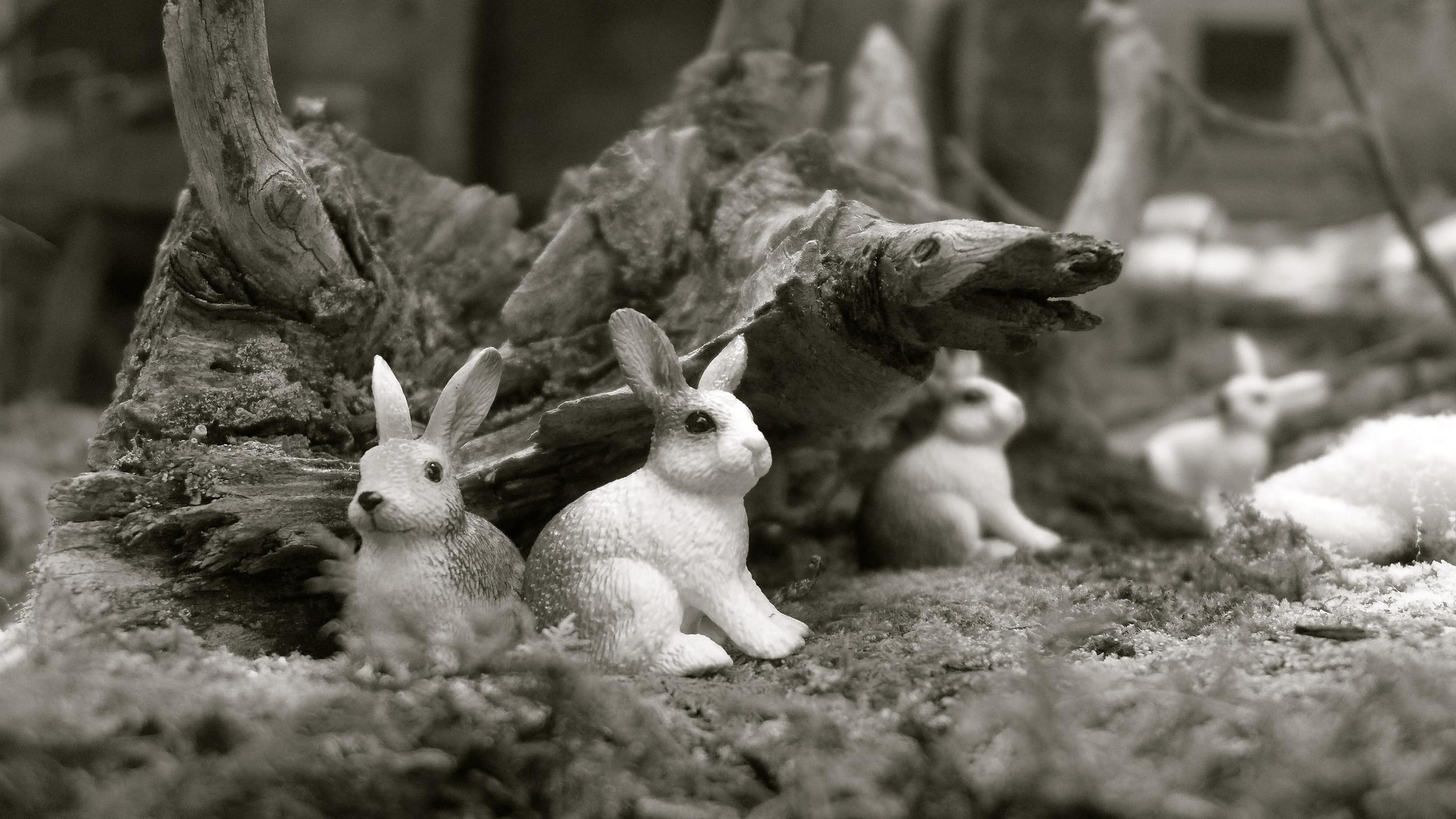 Conejo belén