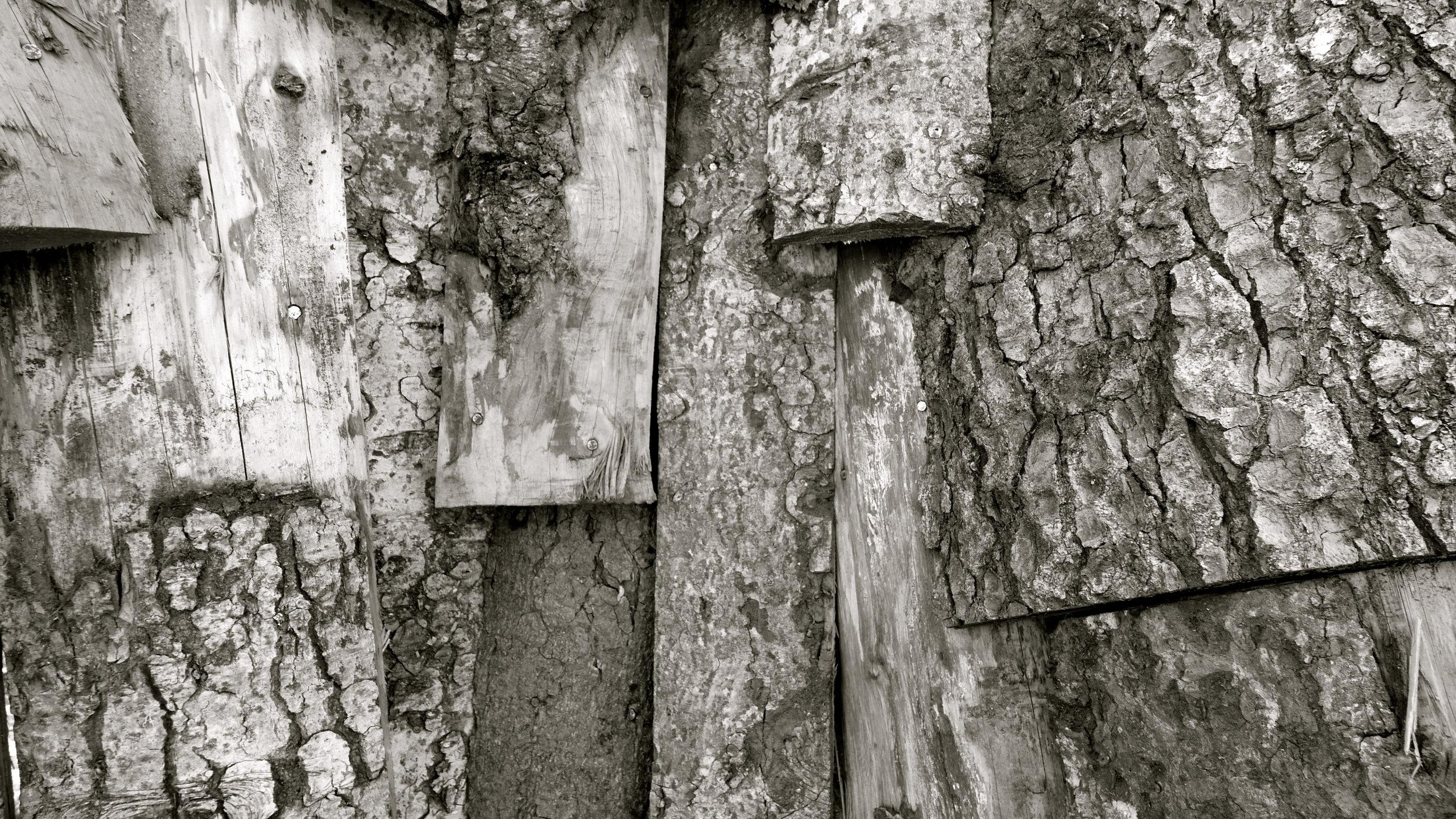 Piel gran árbol Escaladieu - 2