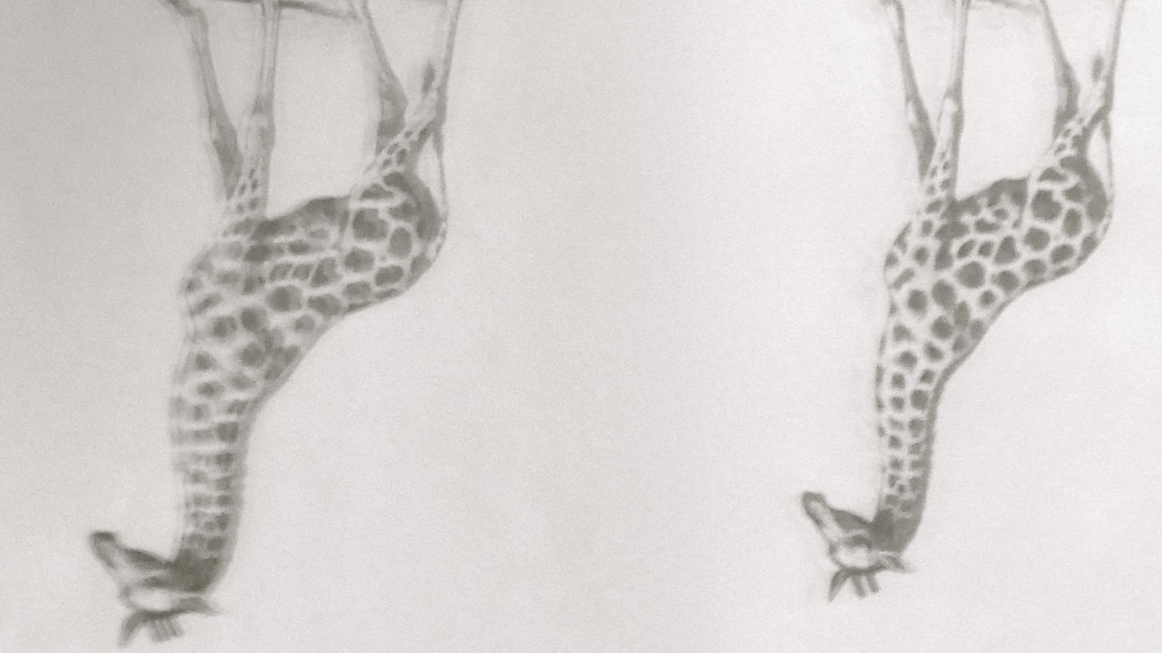 Reflejos de jirafas
