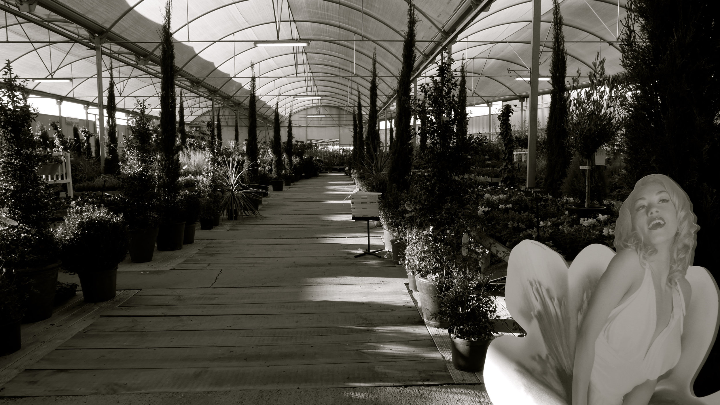 Marilyn en el invernadero
