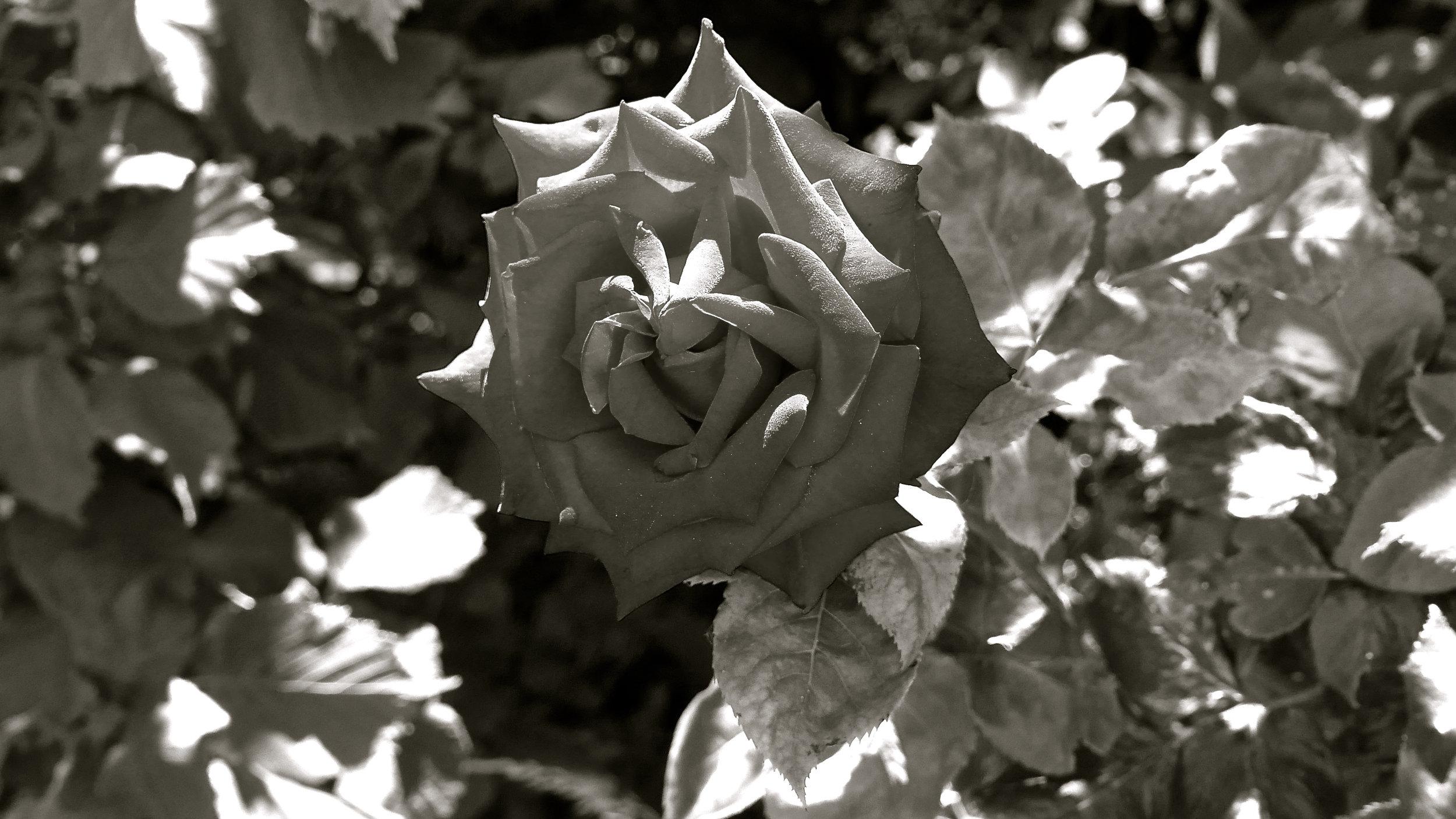 Flor para Joao Gilberto Ok