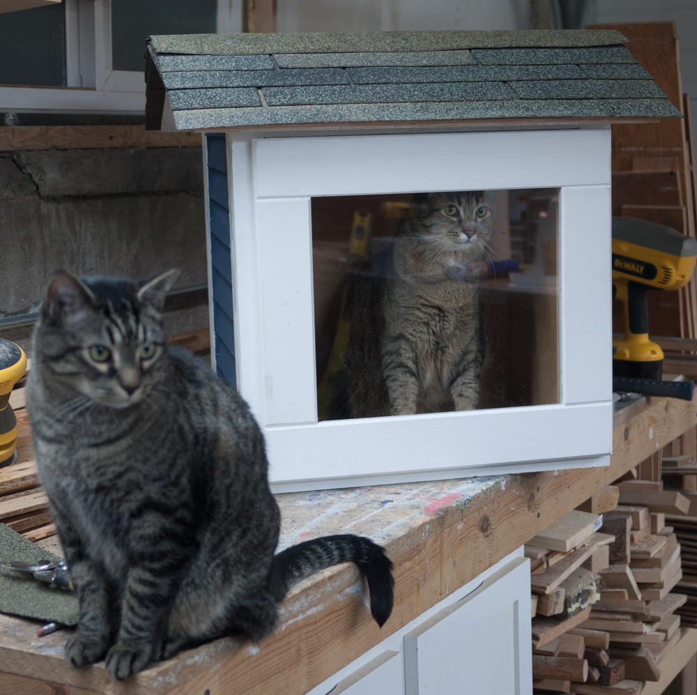 Roof on and cat captured