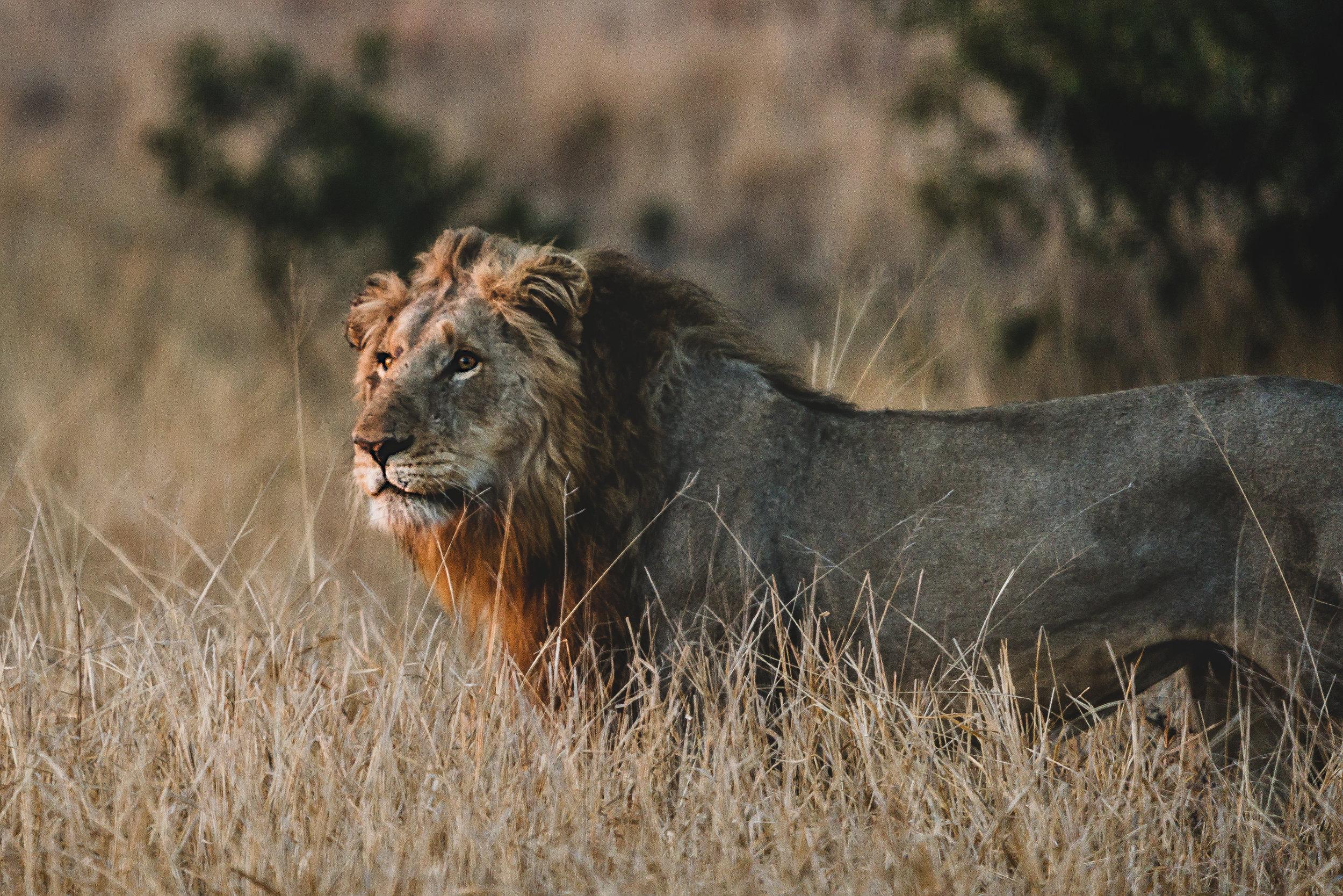 Landscapes by Jason Lanier Photography-Africa 2019-0003.jpg