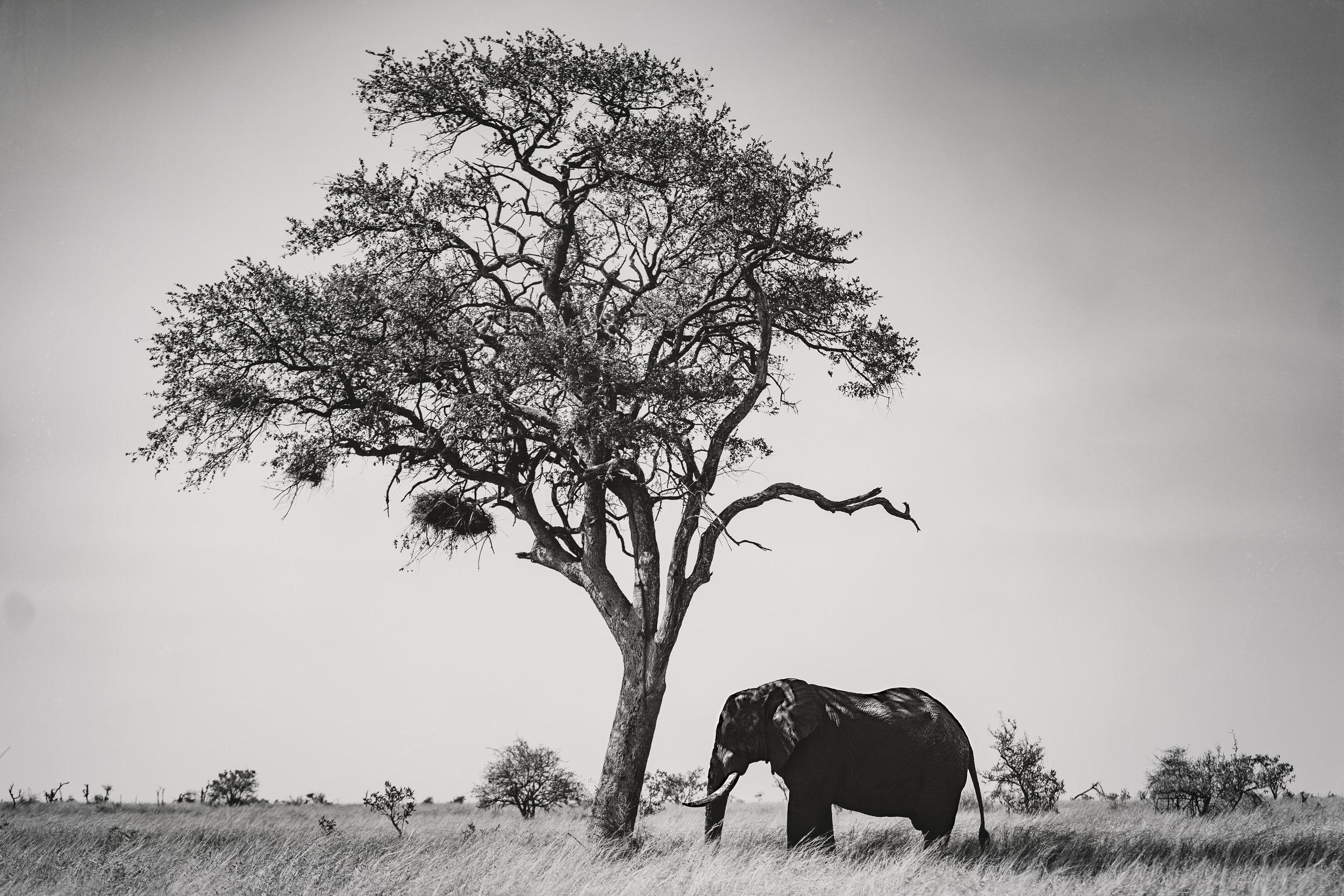 Landscapes by Jason Lanier Photography-Africa 2019-0028.jpg