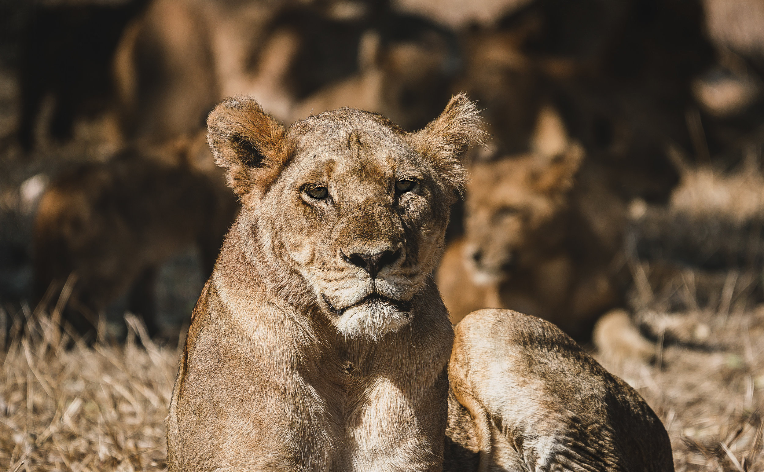 Landscapes by Jason Lanier Photography-Africa 2019-0007.jpg