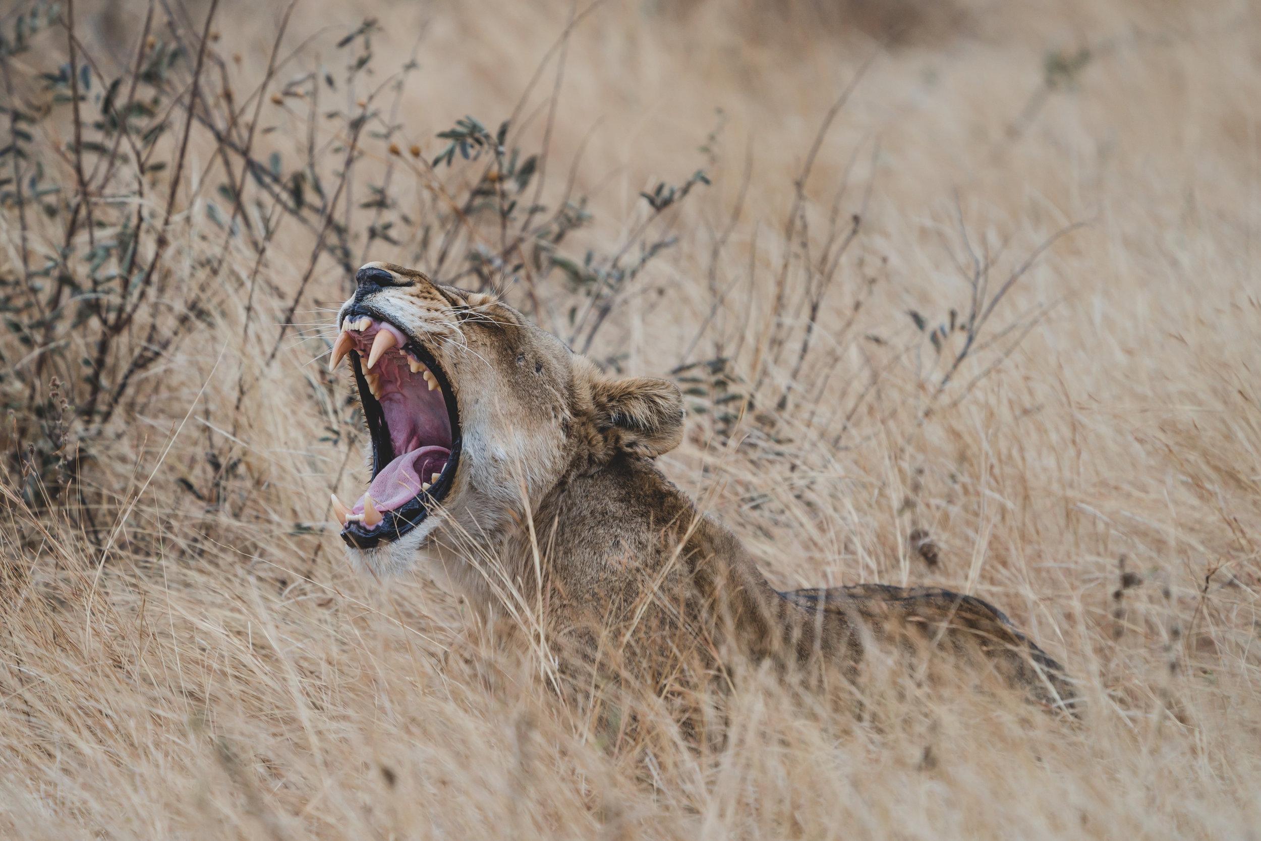Landscapes by Jason Lanier Photography-Africa 2019-0015.jpg