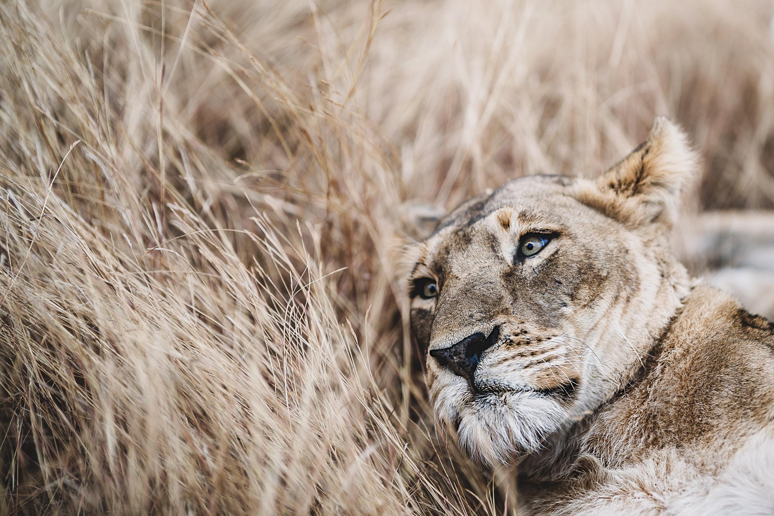 Landscapes by Jason Lanier Photography-Africa 2019-0017 (1).jpg