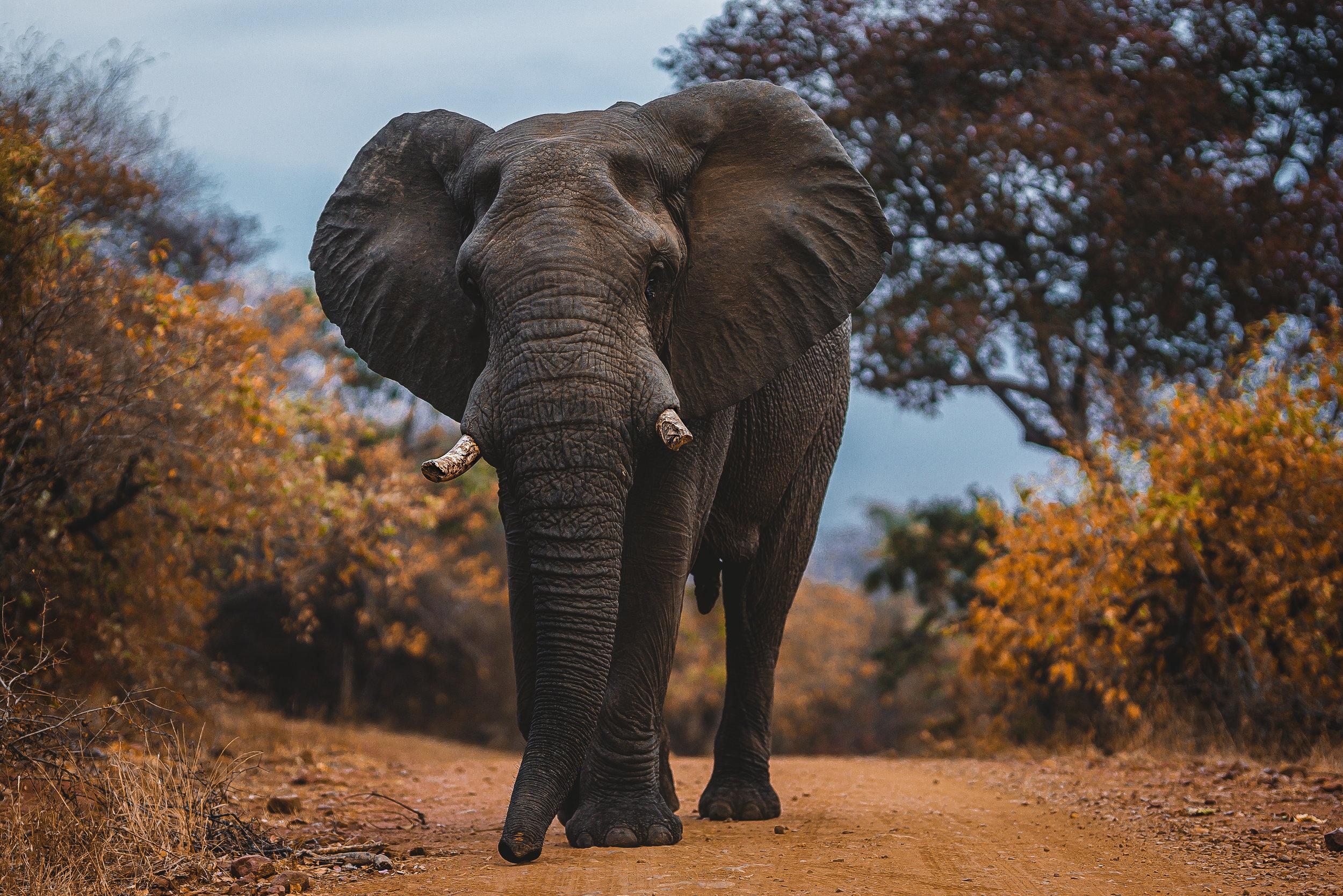 Landscapes by Jason Lanier Photography-Africa 2019-0021 (1).jpg