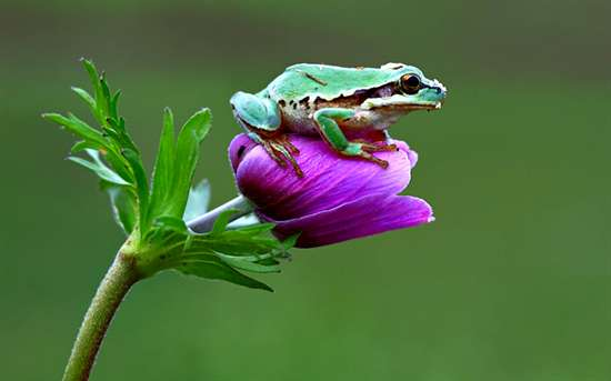 Frogs-HD-Photo76ee98.jpg
