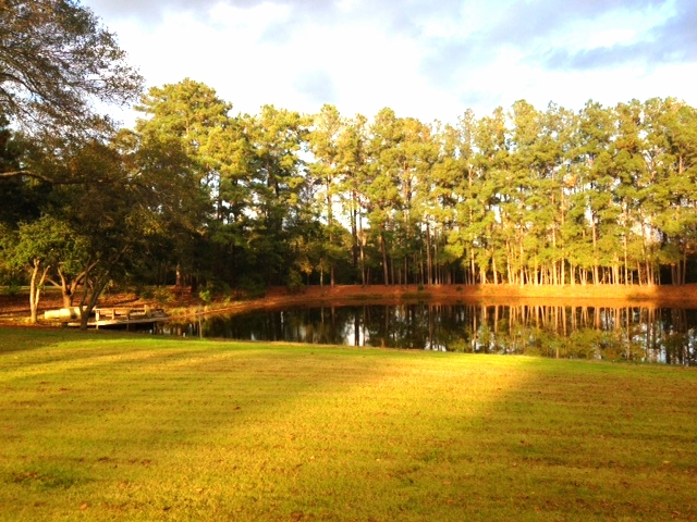 A view from just off of the deck overlooking the pond and dock.
