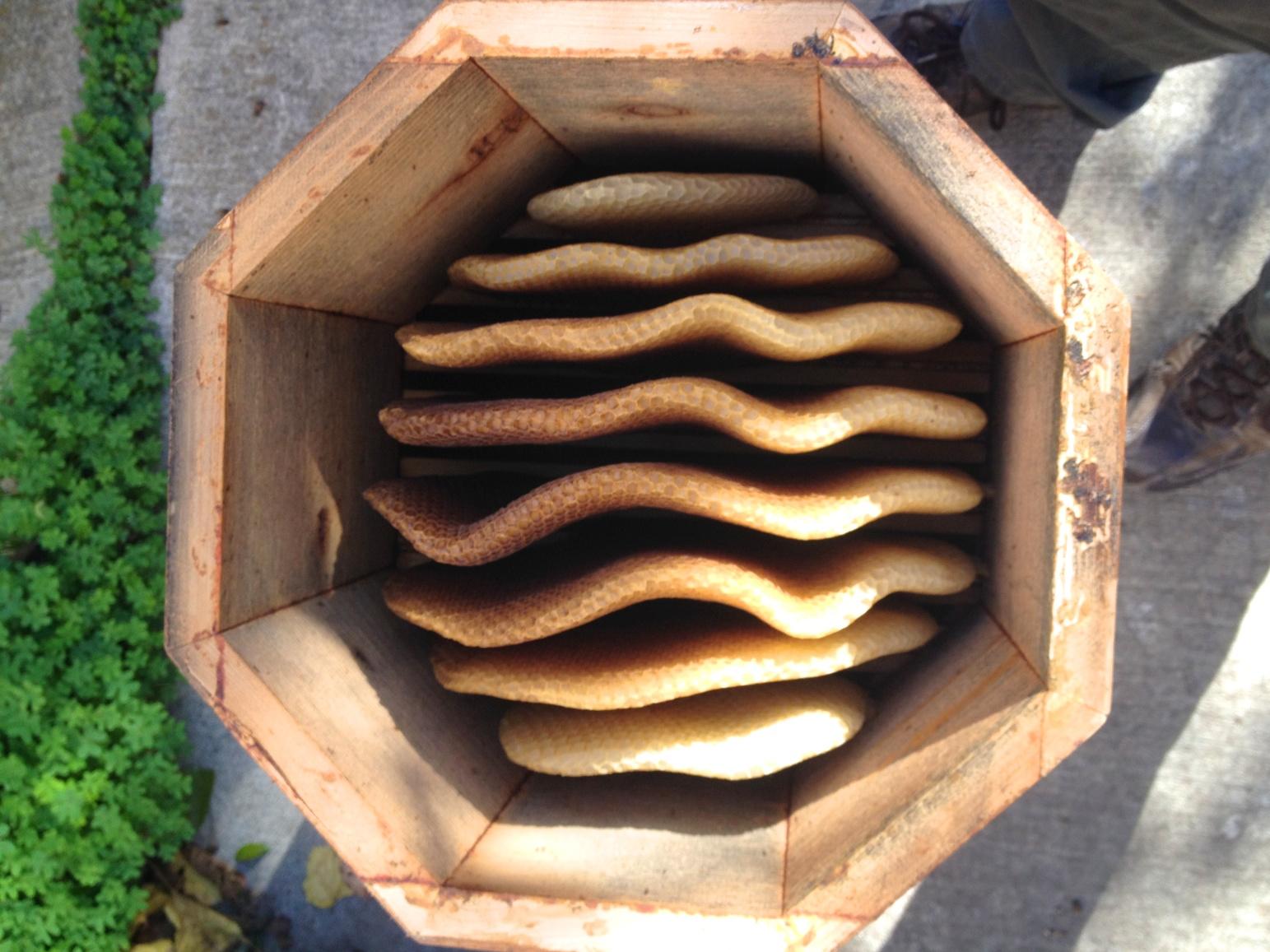 A perished hive.