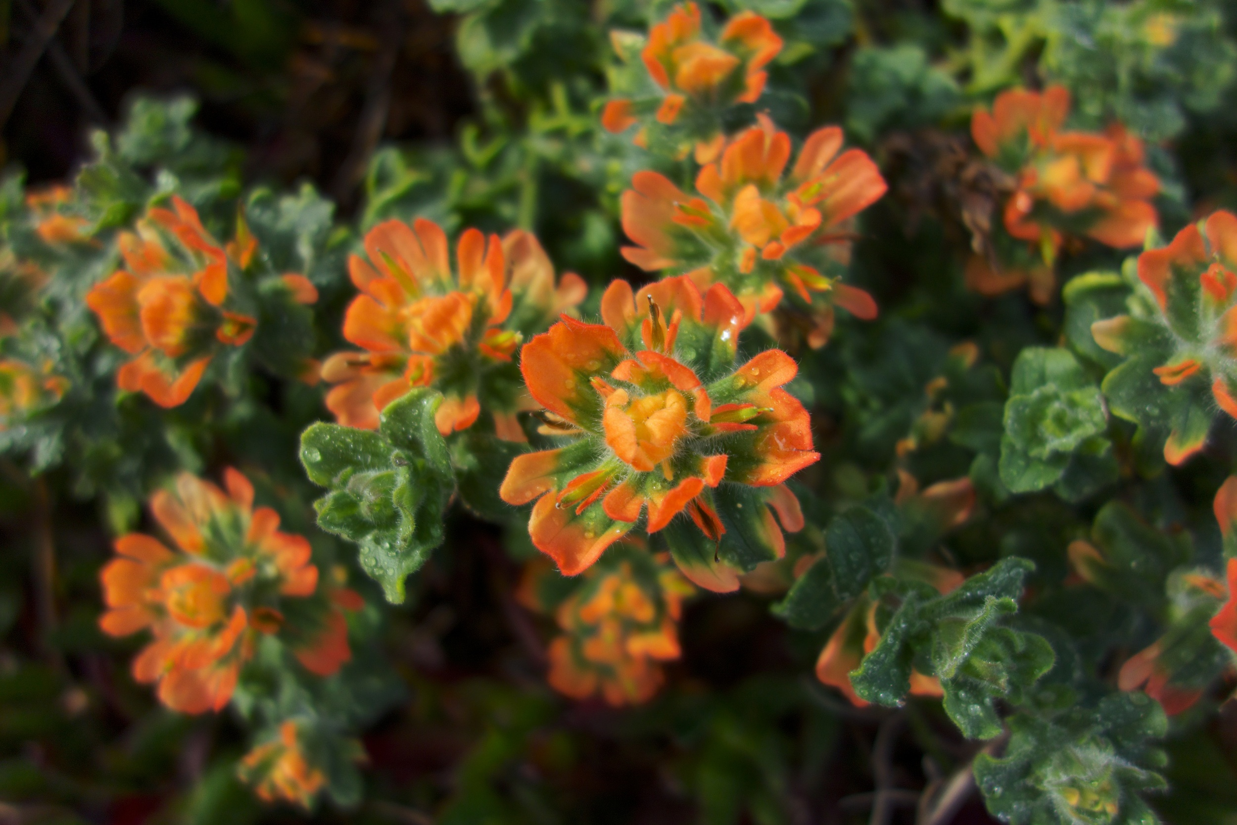 → Some of the most magical and vibrant succulents and ground cover exist on this Big Sur beach.