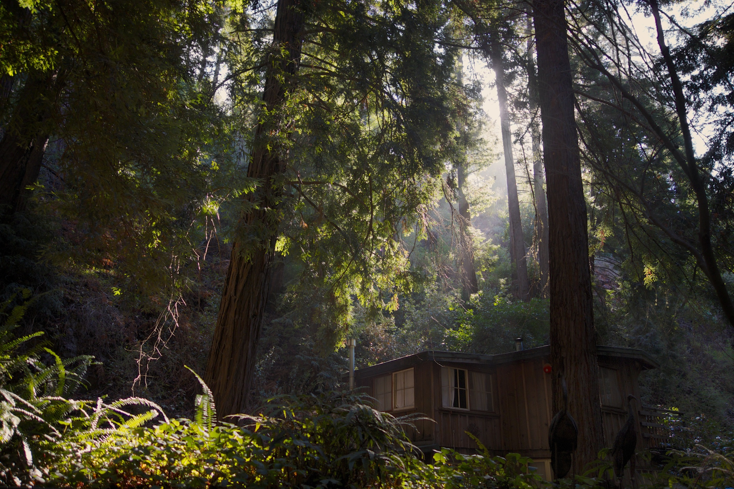 → Our view from the deck of our tiny + perfect private cabin, Castro Canyon.