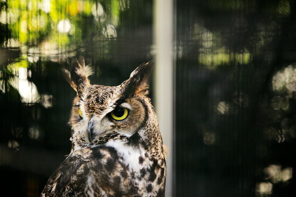 [www.emmakmorris.com]_8d8f_Owl+948.jpeg