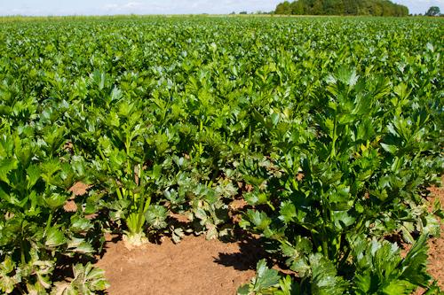 farm images-14.jpg