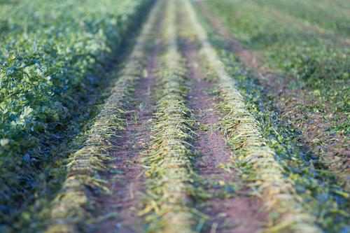 farm images-21.jpg