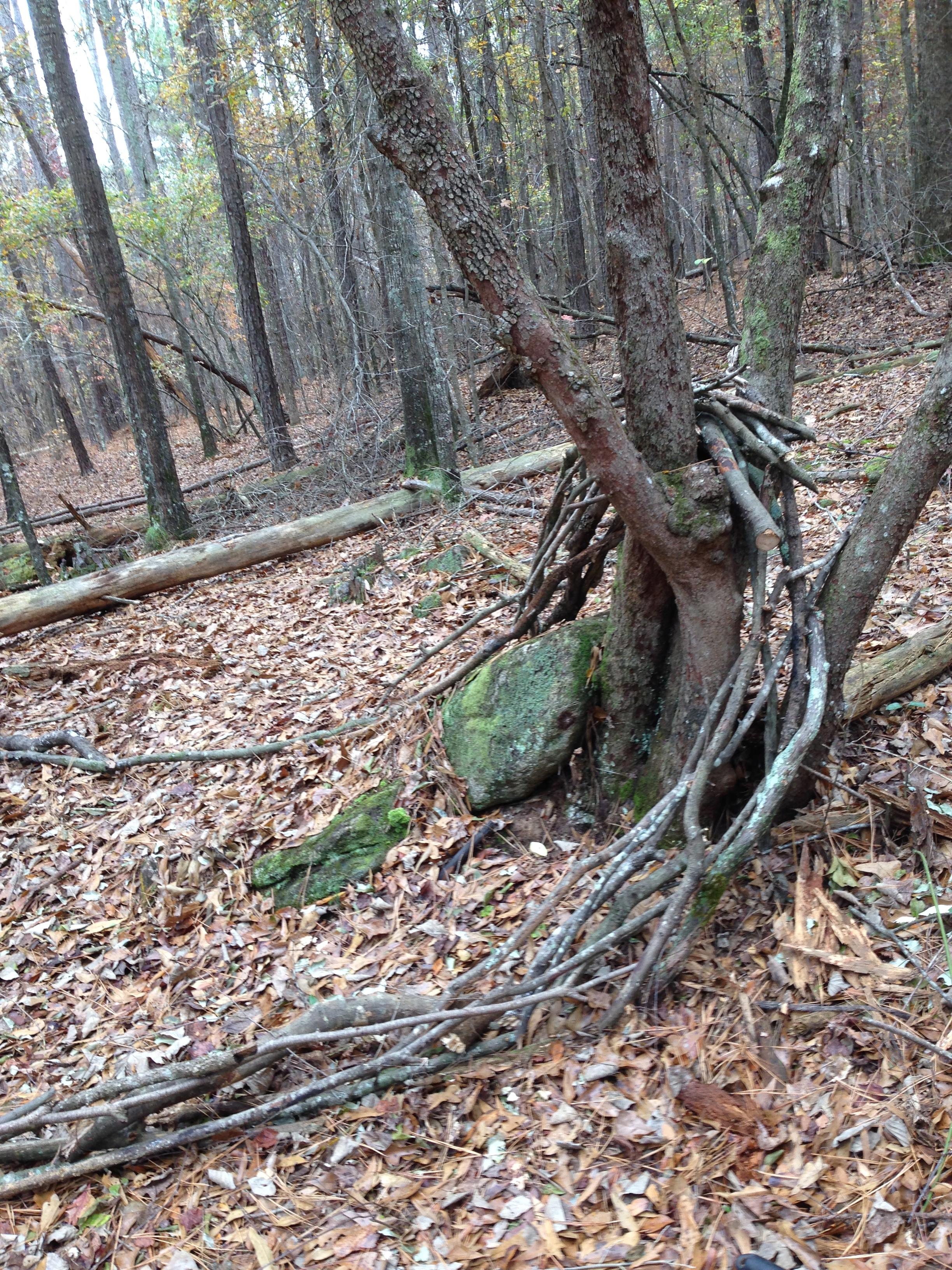 Wood flow. Sandy Creek Park. Athens, GA. Fall 2013.