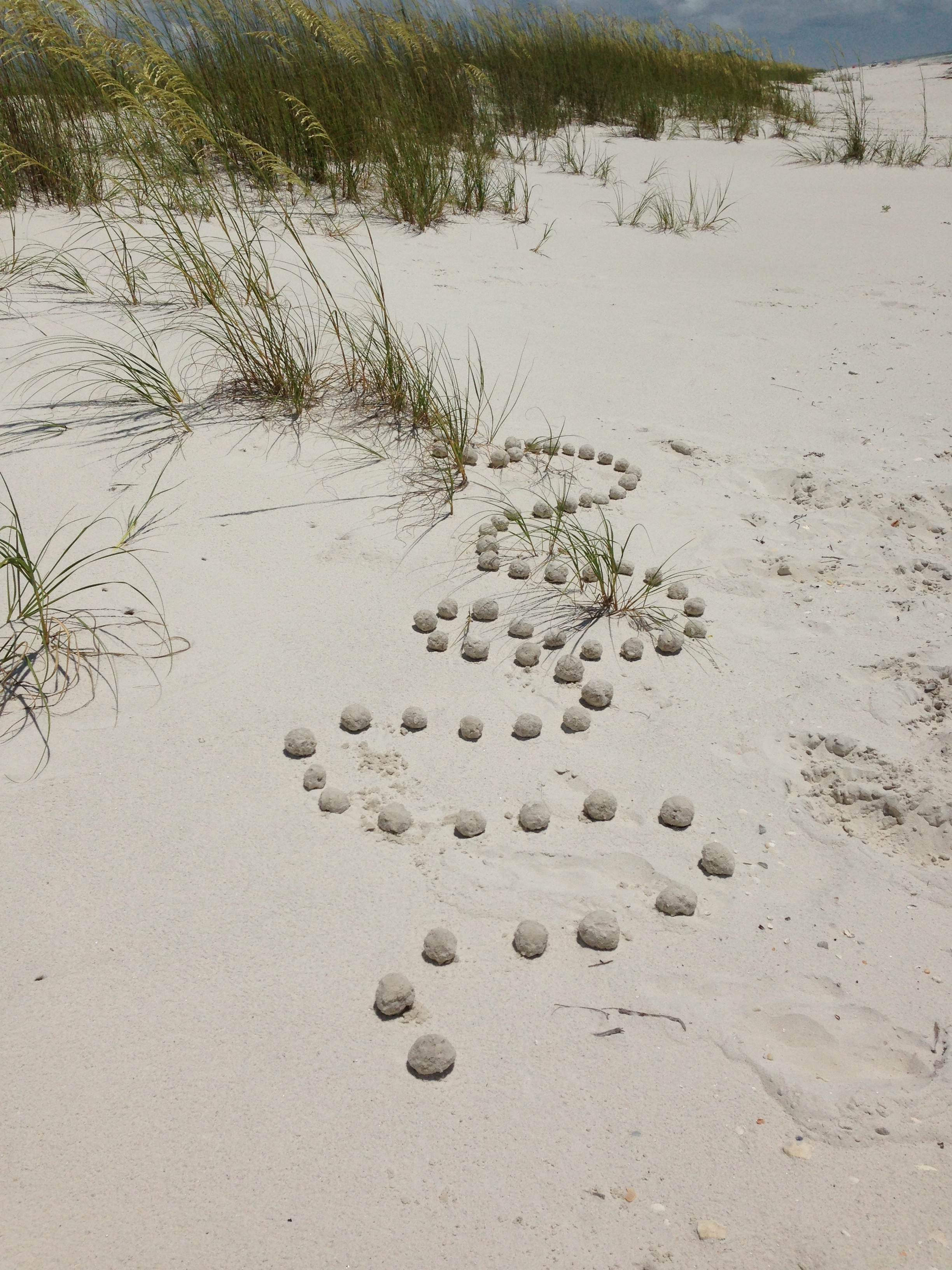 Sand balls on dune. Cape St. San Blas, FL. Summer 2013.