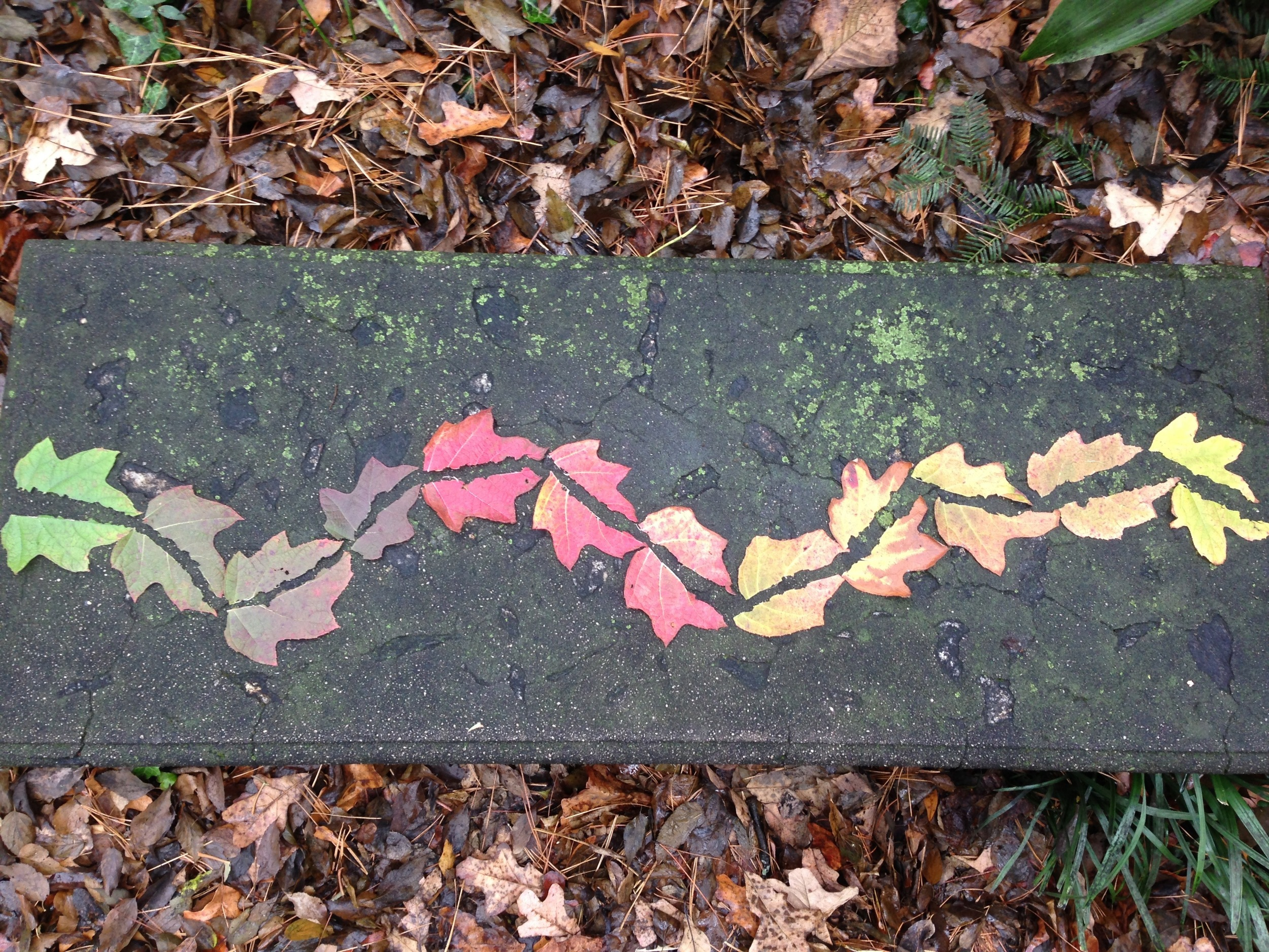 Leaves in stone bench. Garden Club of Georgia Founder's Garden. Athens, GA. Fall 2013.