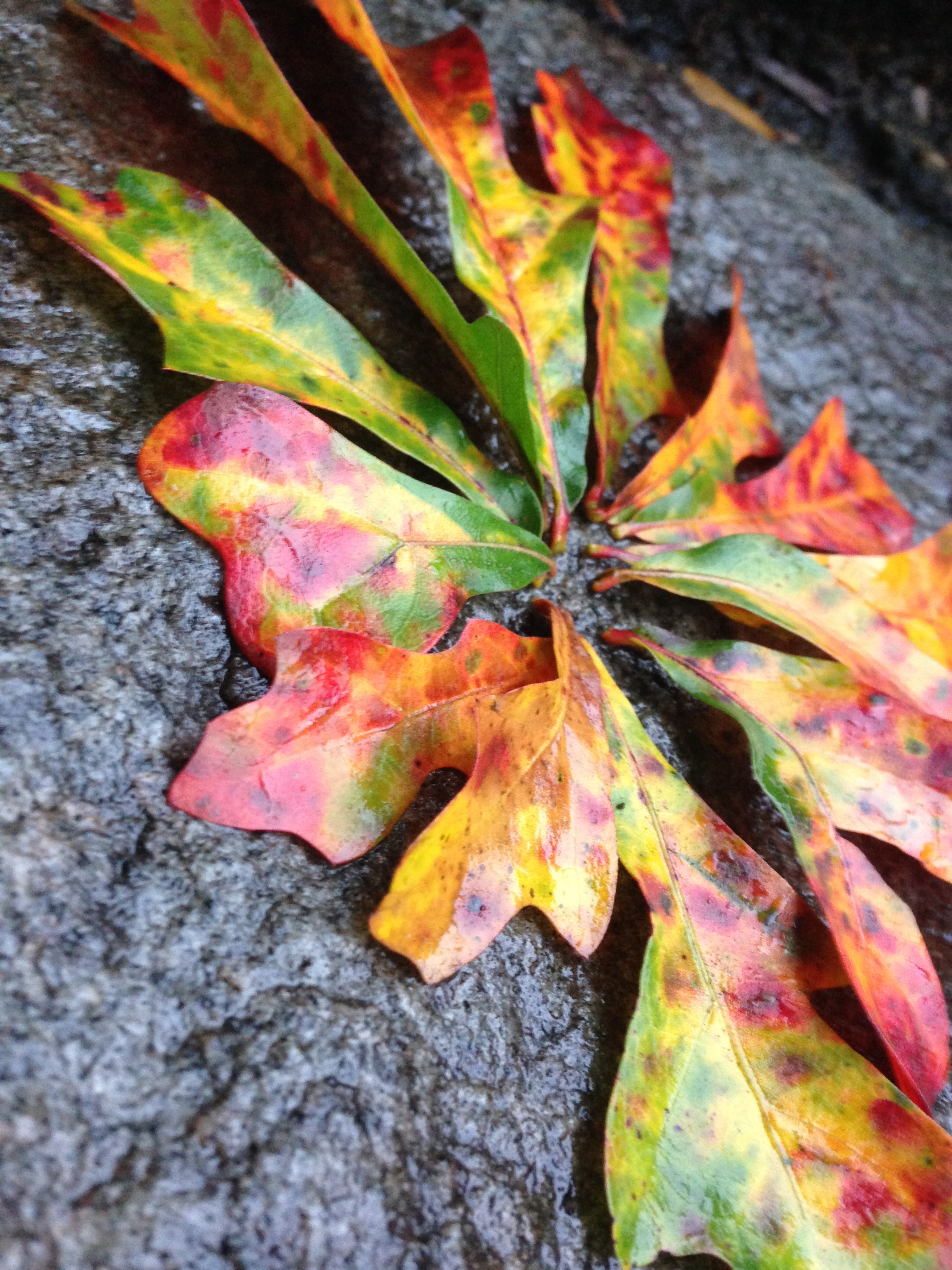 Leaves on Stone. Athens, GA. Fall 2013