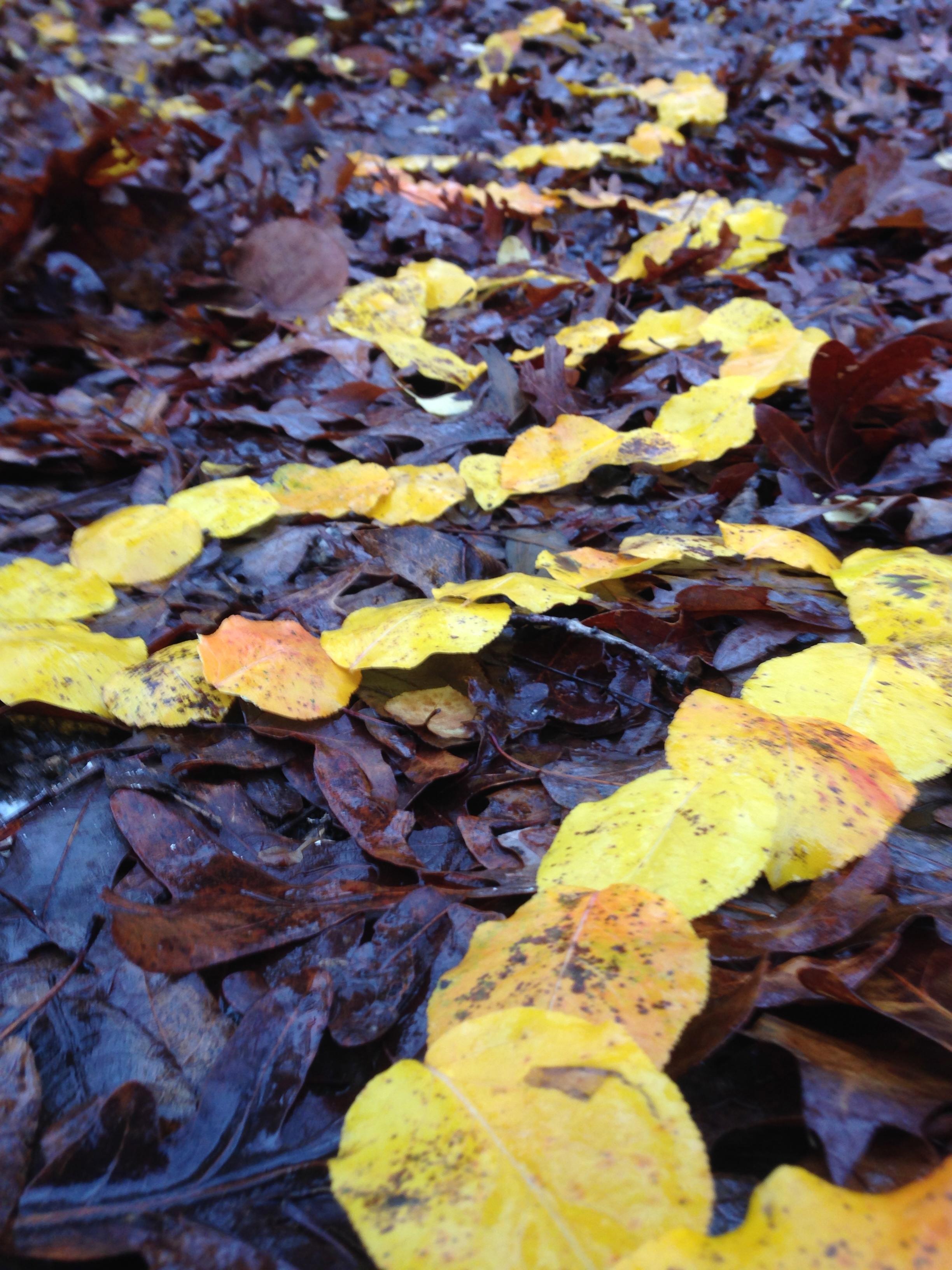 Leaves. Lake Herrick/Oconee Forest Trail. The University of Georgia. Athens, GA. Fall 2013.