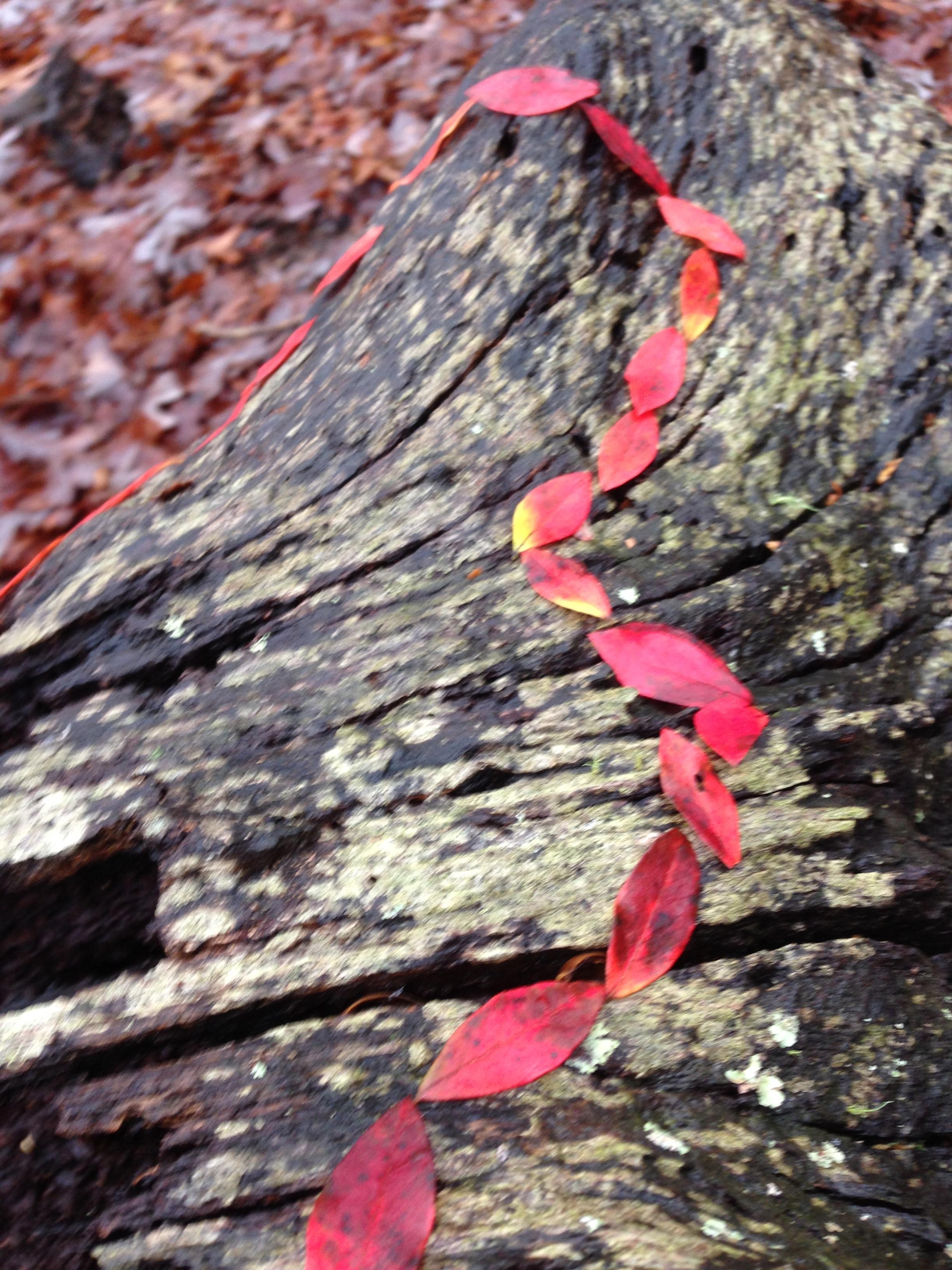 Leaves on Stump. Lake Herrick/Oconee Forest Trail. The University of Georgia. Athens, GA. Fall 2013.