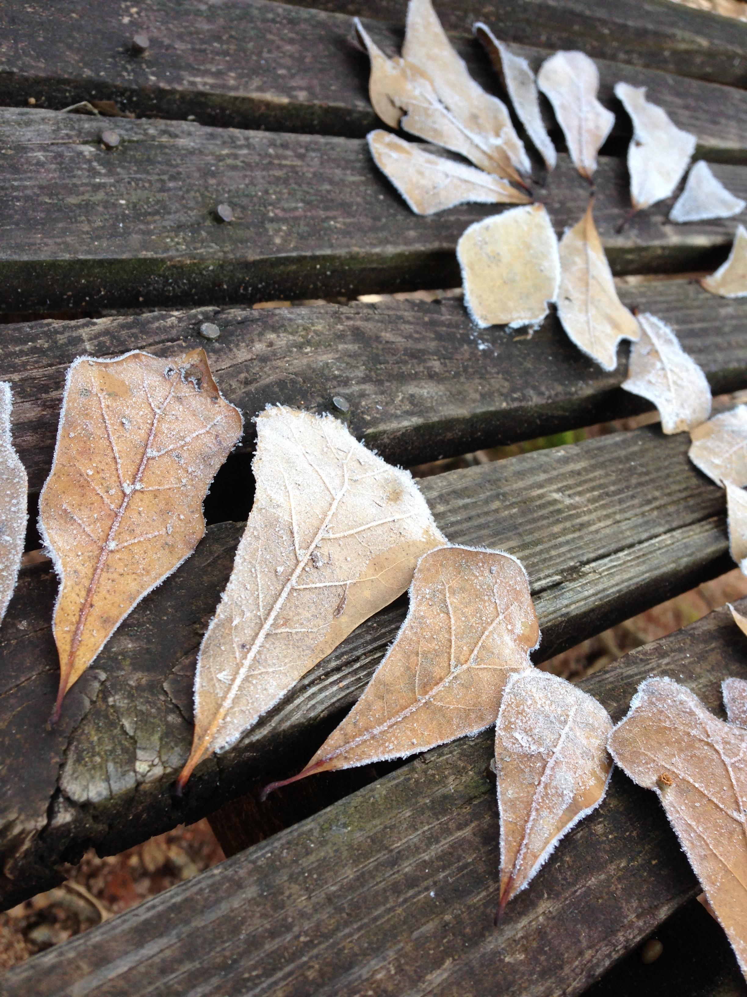 Frosty Leaves. Lake Herrick. University of Georgia. Athens. GA. Fall 2013.